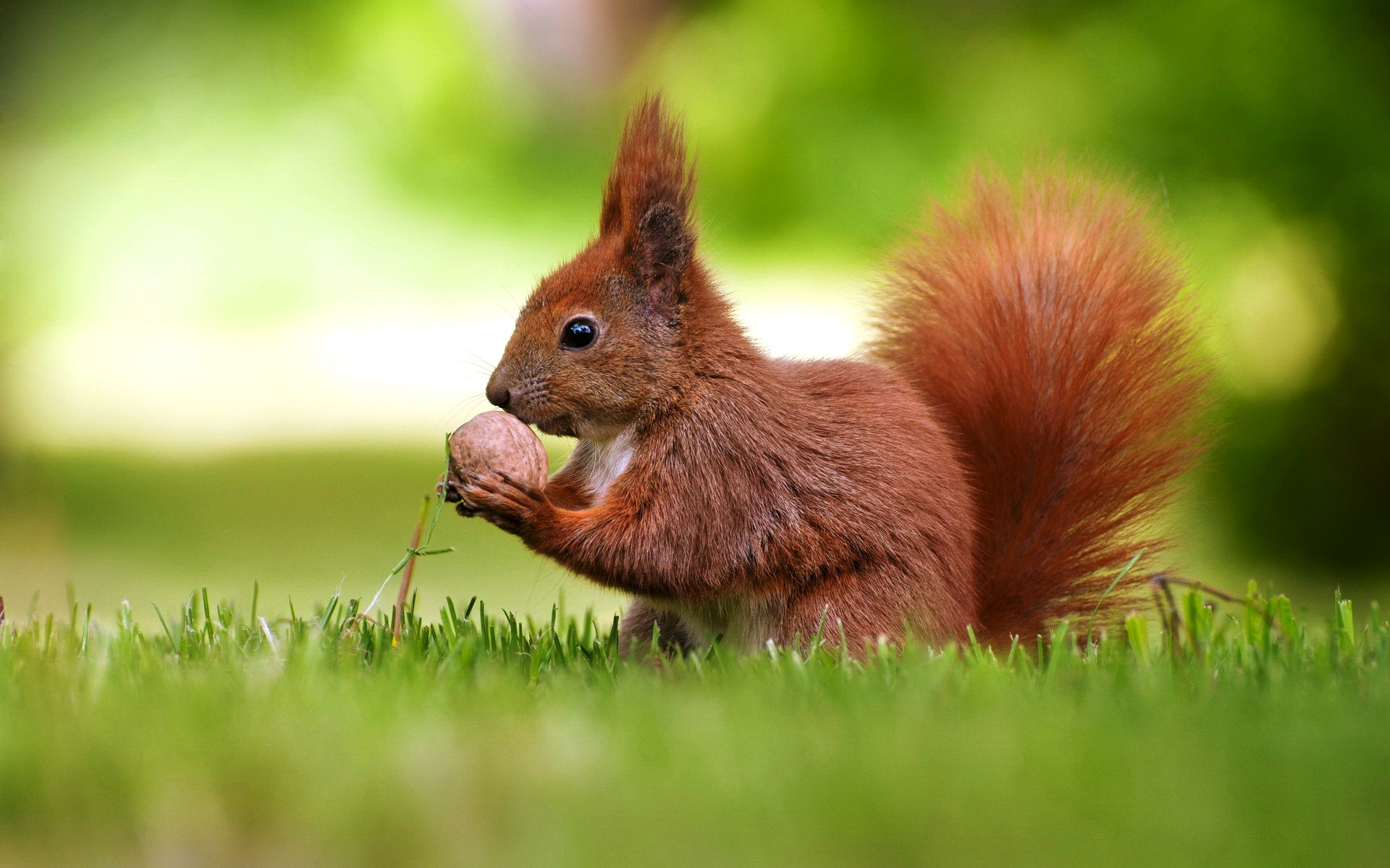 Fantastic Squirrel Wallpaper