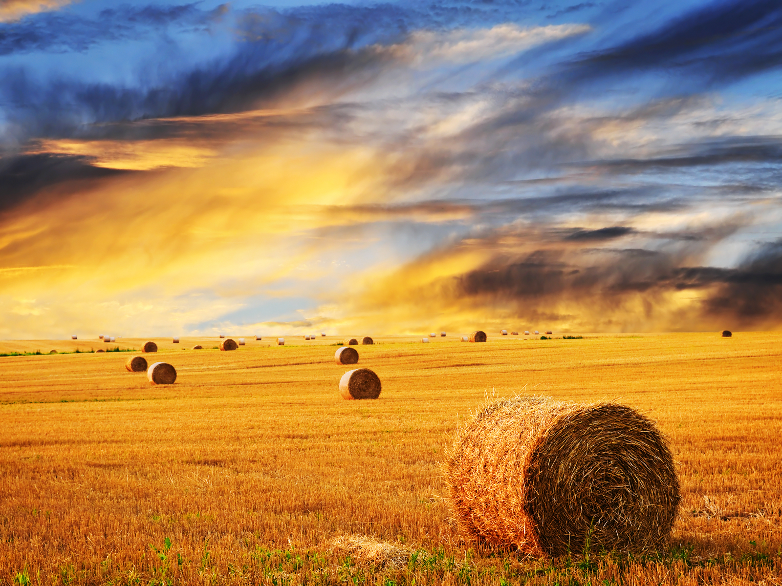 Farm Skyline Wheat wallpaper