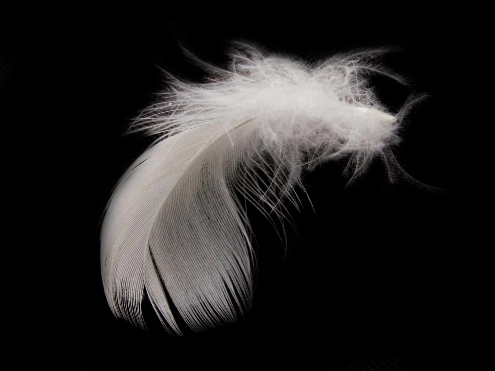 1600 x 1200 · 71 kB · jpeg, White Feathers Desktop