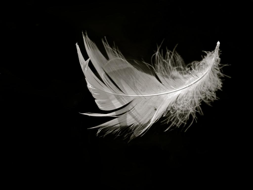 ... Black And White Feather ...