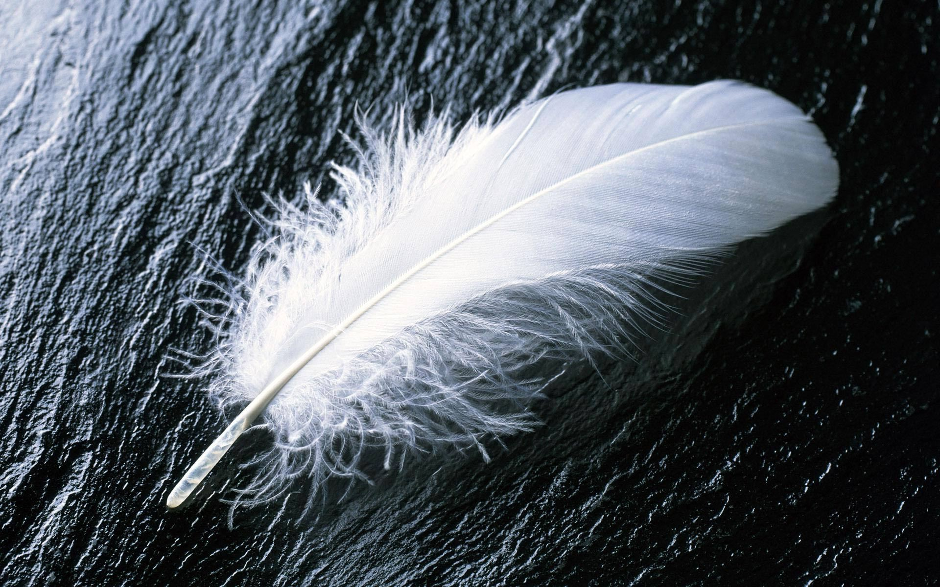 Feather44; White feather37 White feather Widescreen Wallpaper - #