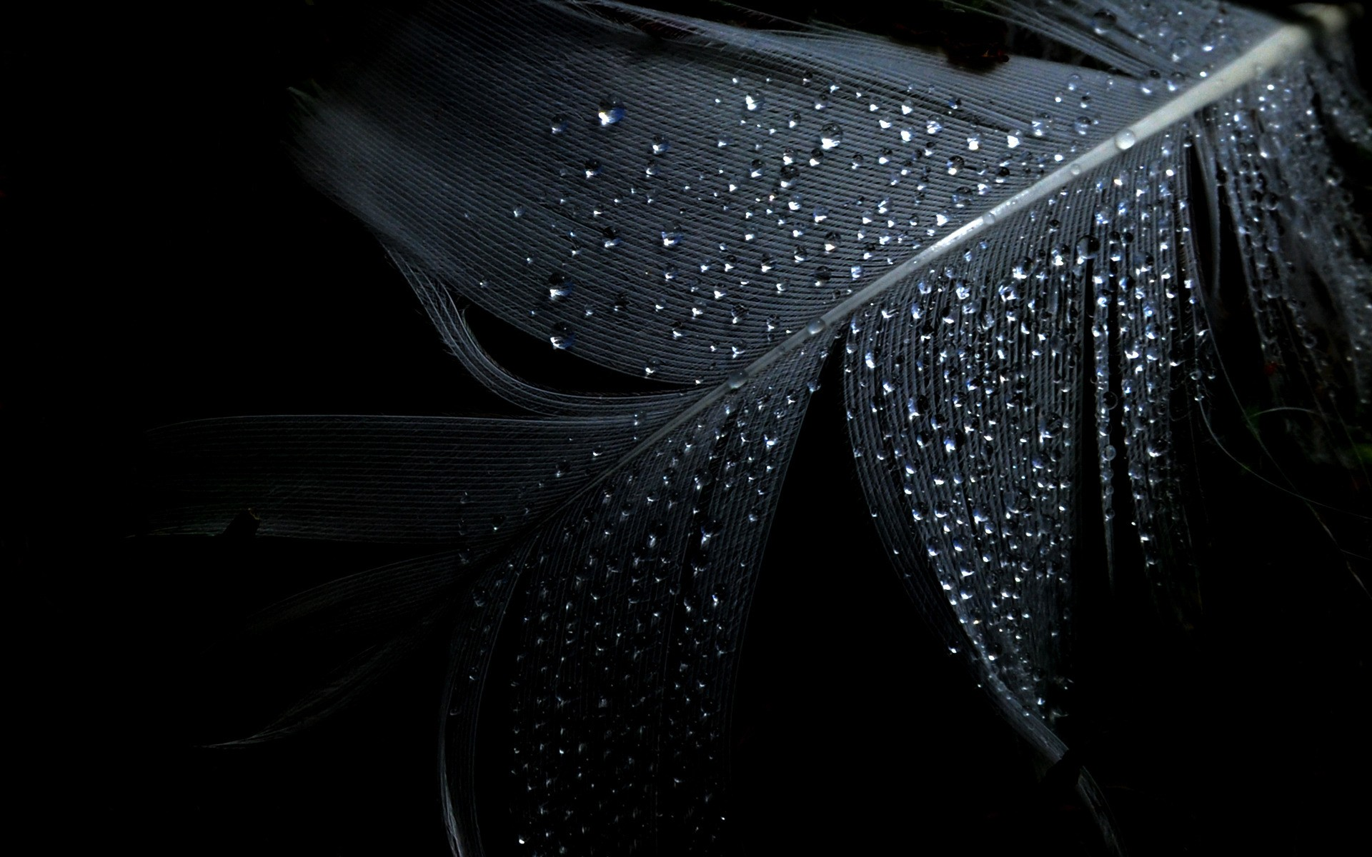 Feather Drops Wallpaper