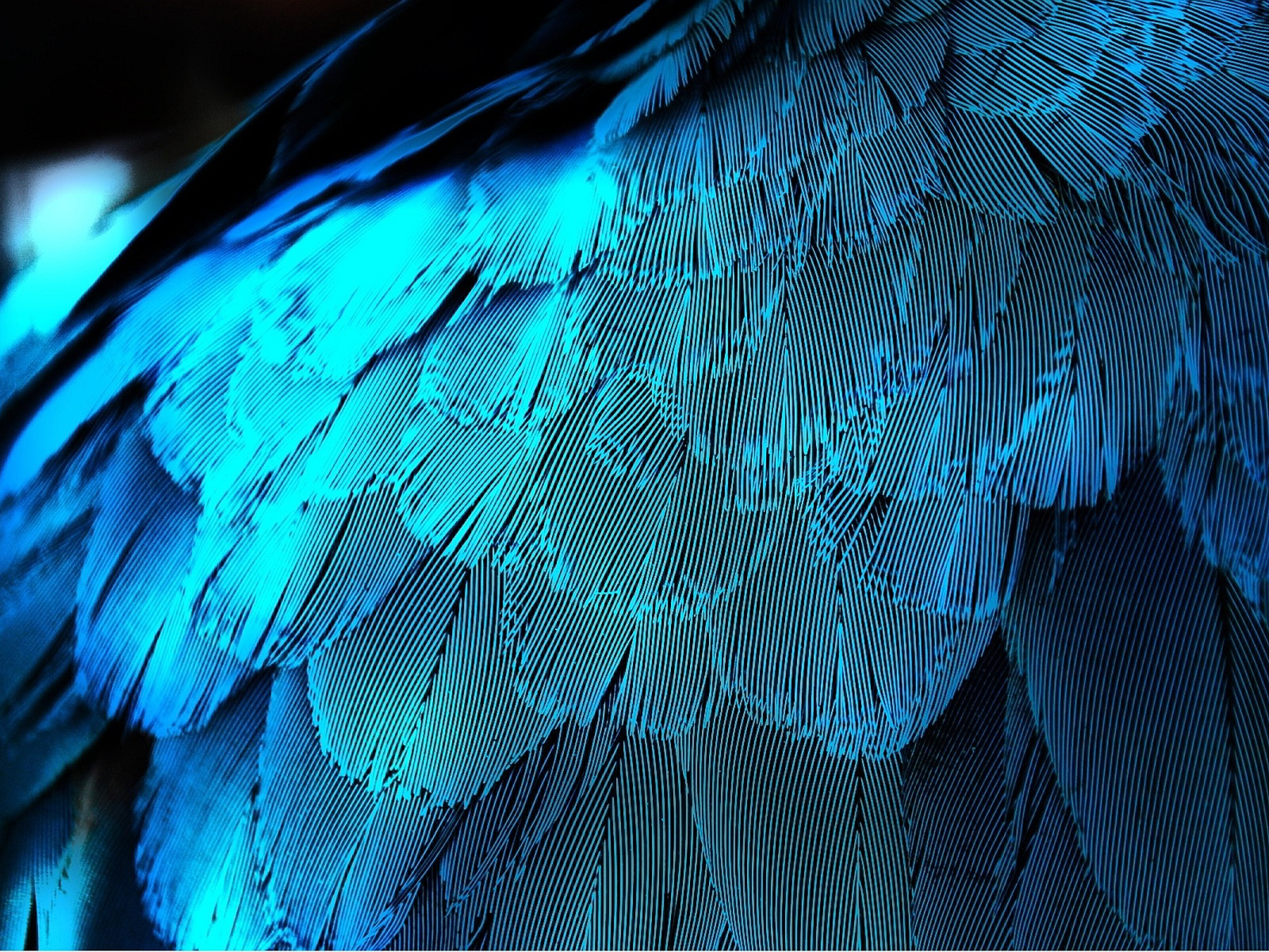 wallpaper feather download - photo #13