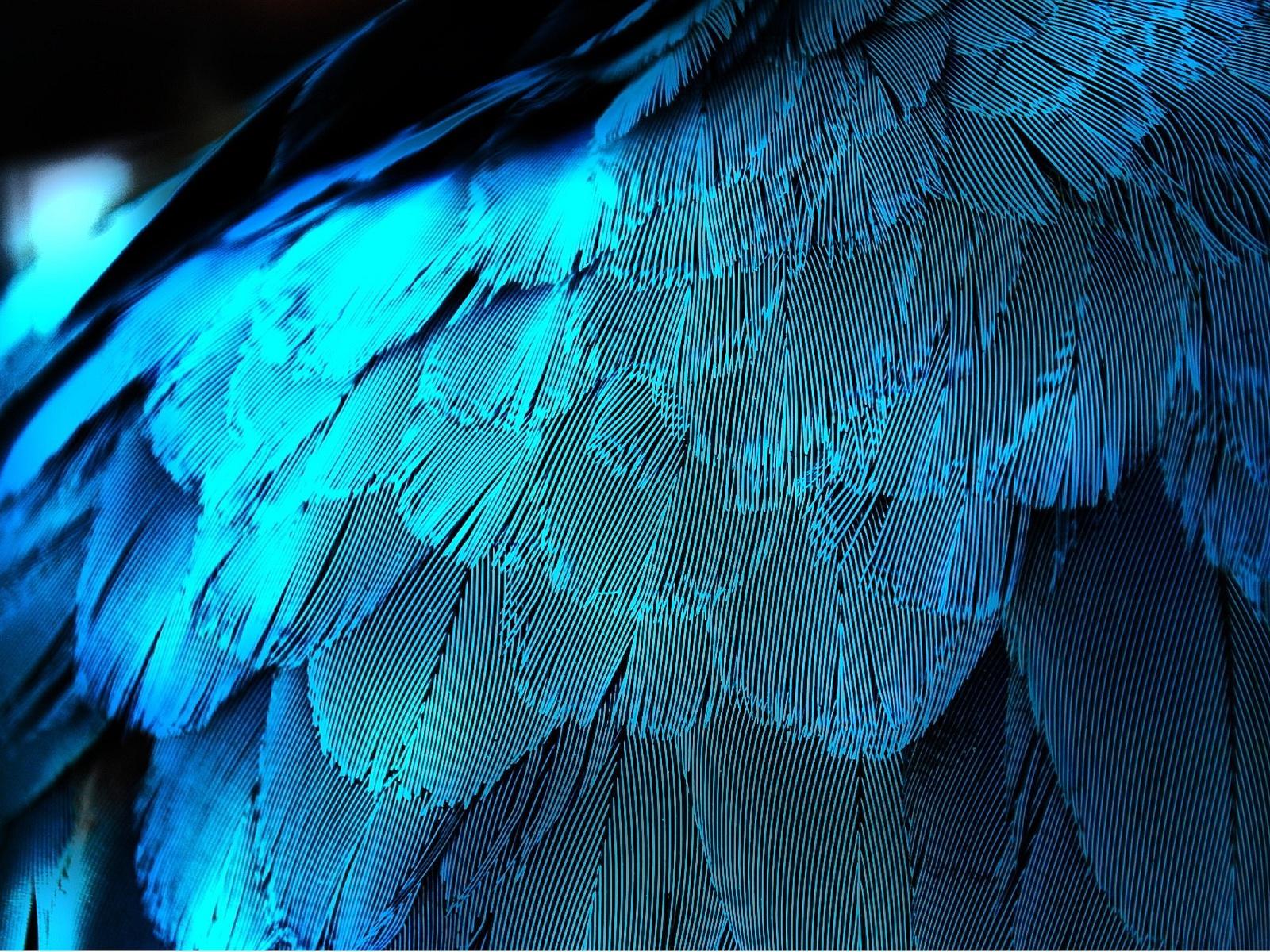 Feather Wallpaper; Feather Wallpaper; Feather Wallpaper ...