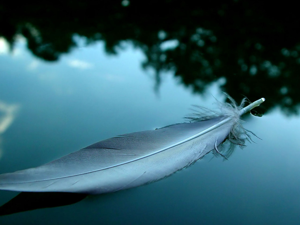 Feather Wallpaper HD