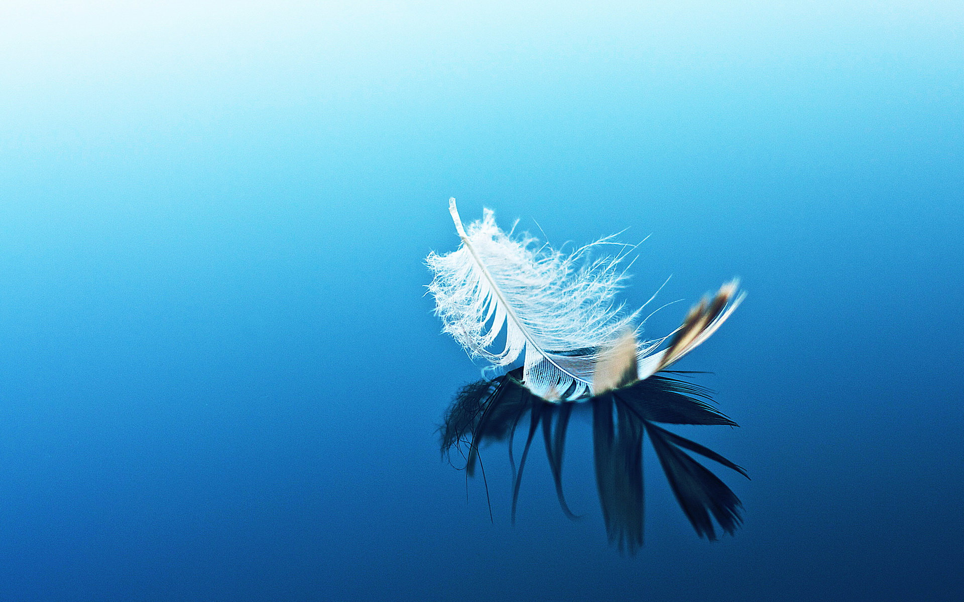 Artistic - Feather Wallpaper