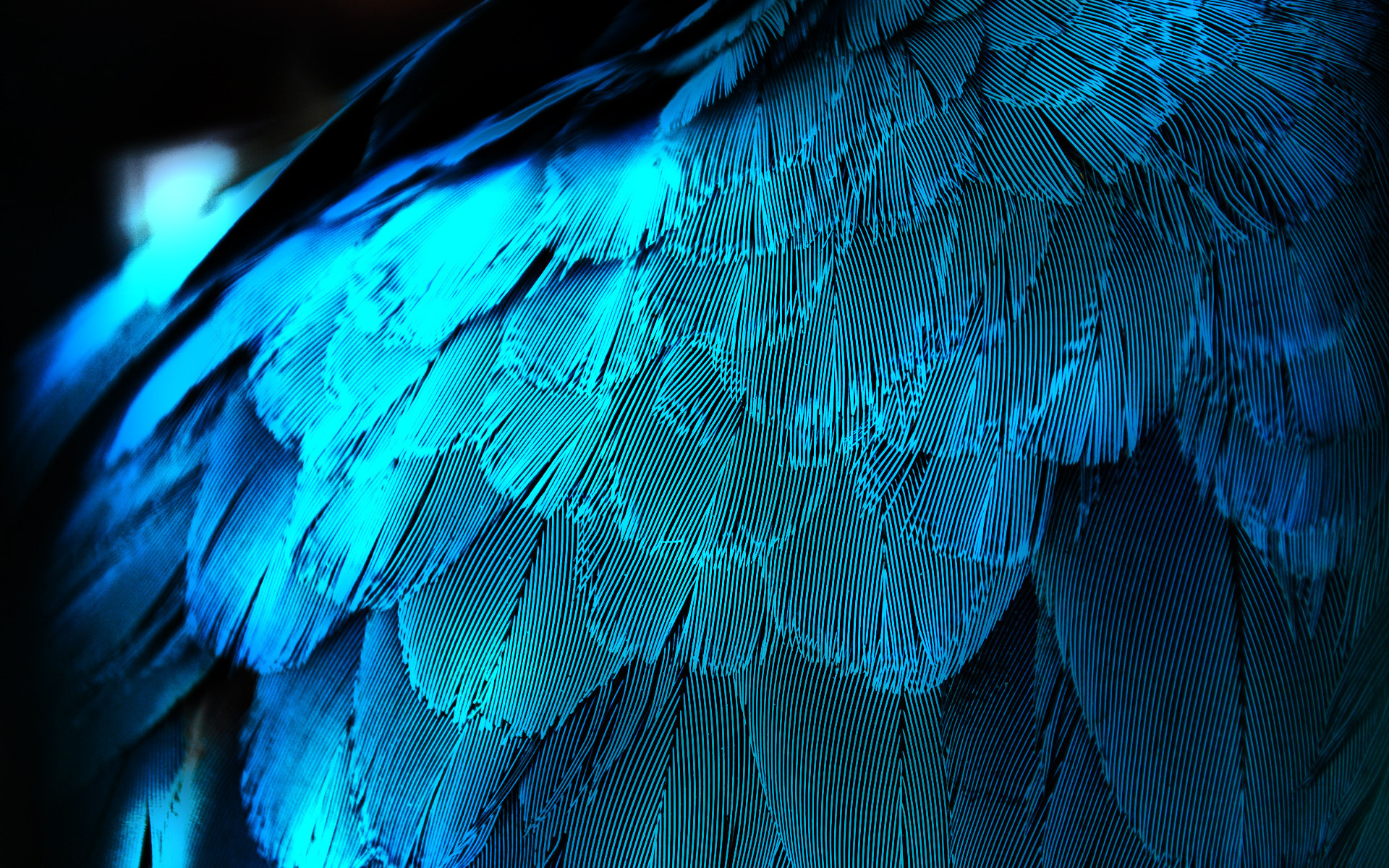 Blue Shade Wallpapers Blue Shades Feathers wallpaper