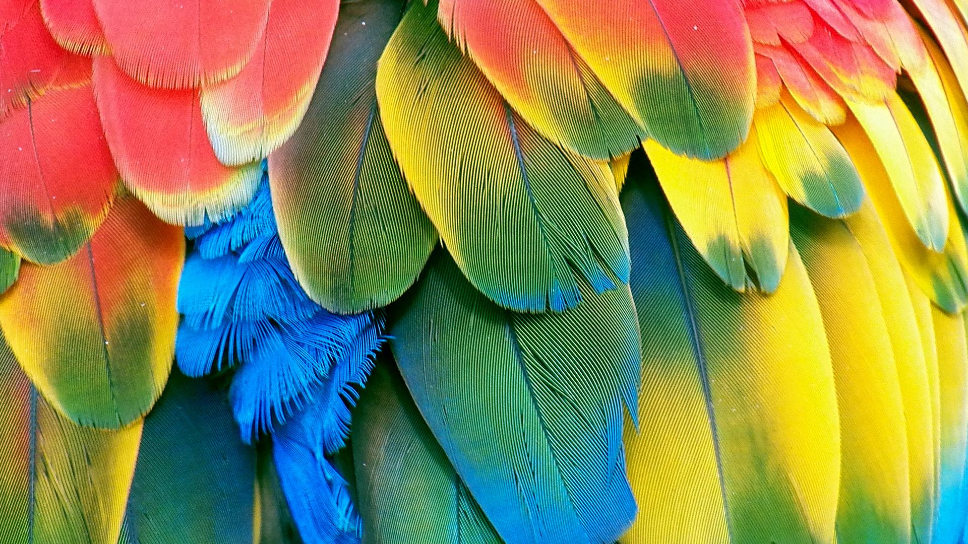 Feathers · Feathers · Feathers · Feathers ...