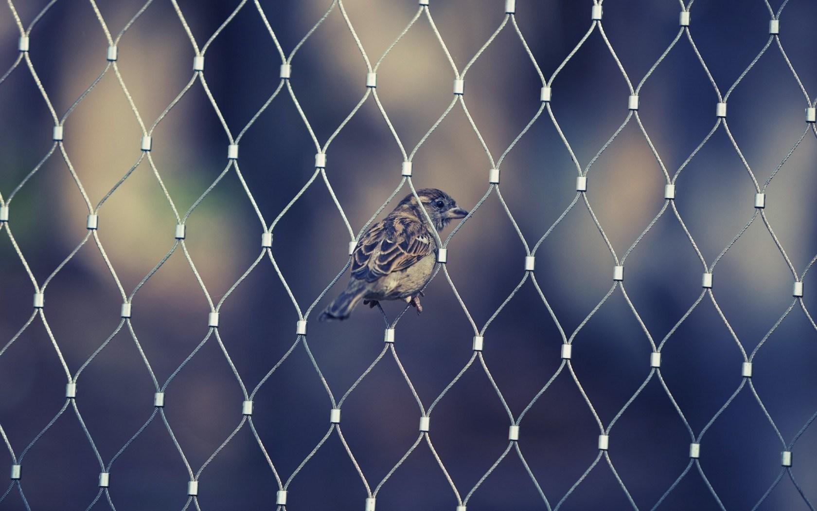 Fence Bird Sparrow Awesome Photo
