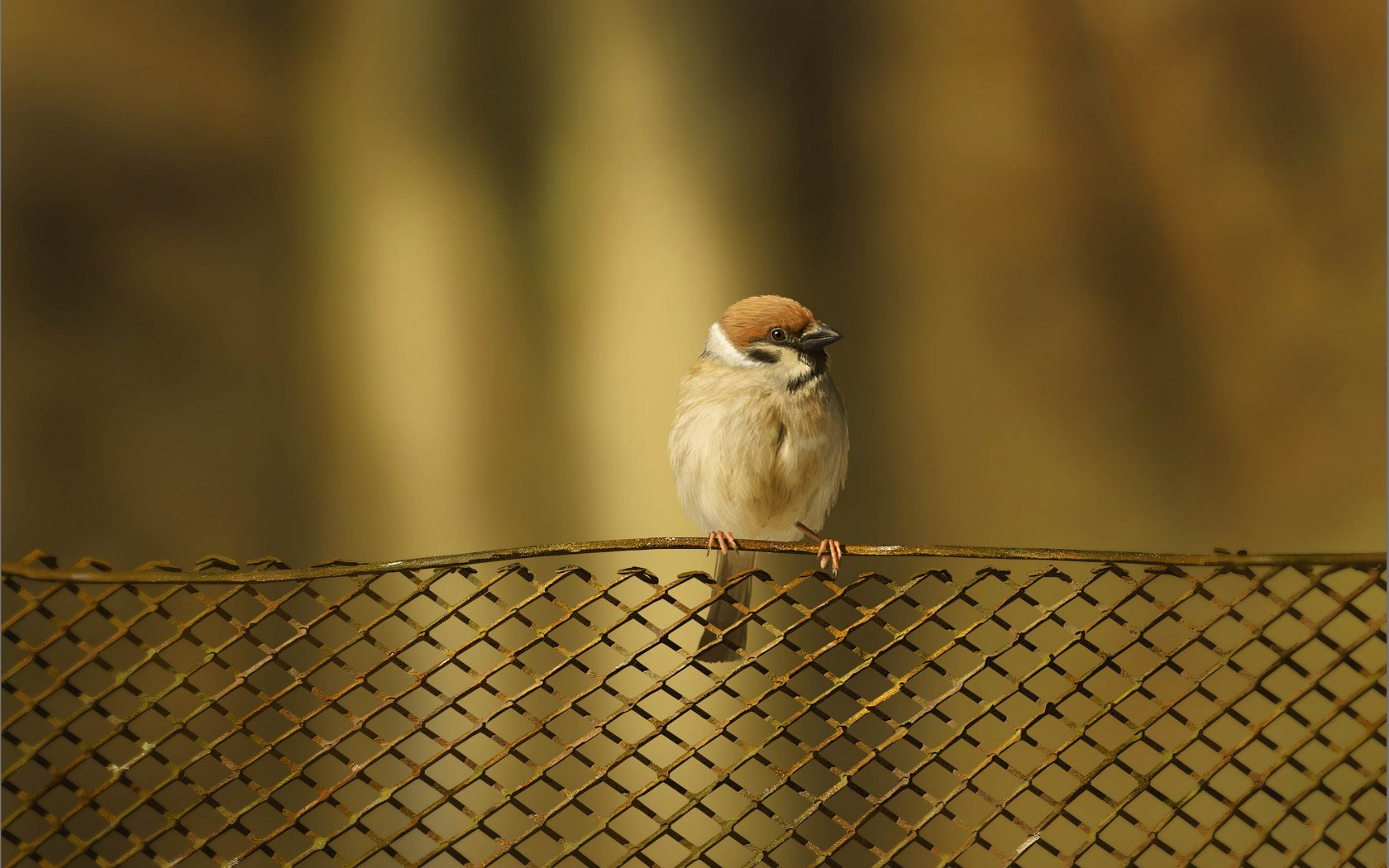 Fence Bird Sparrow Photo