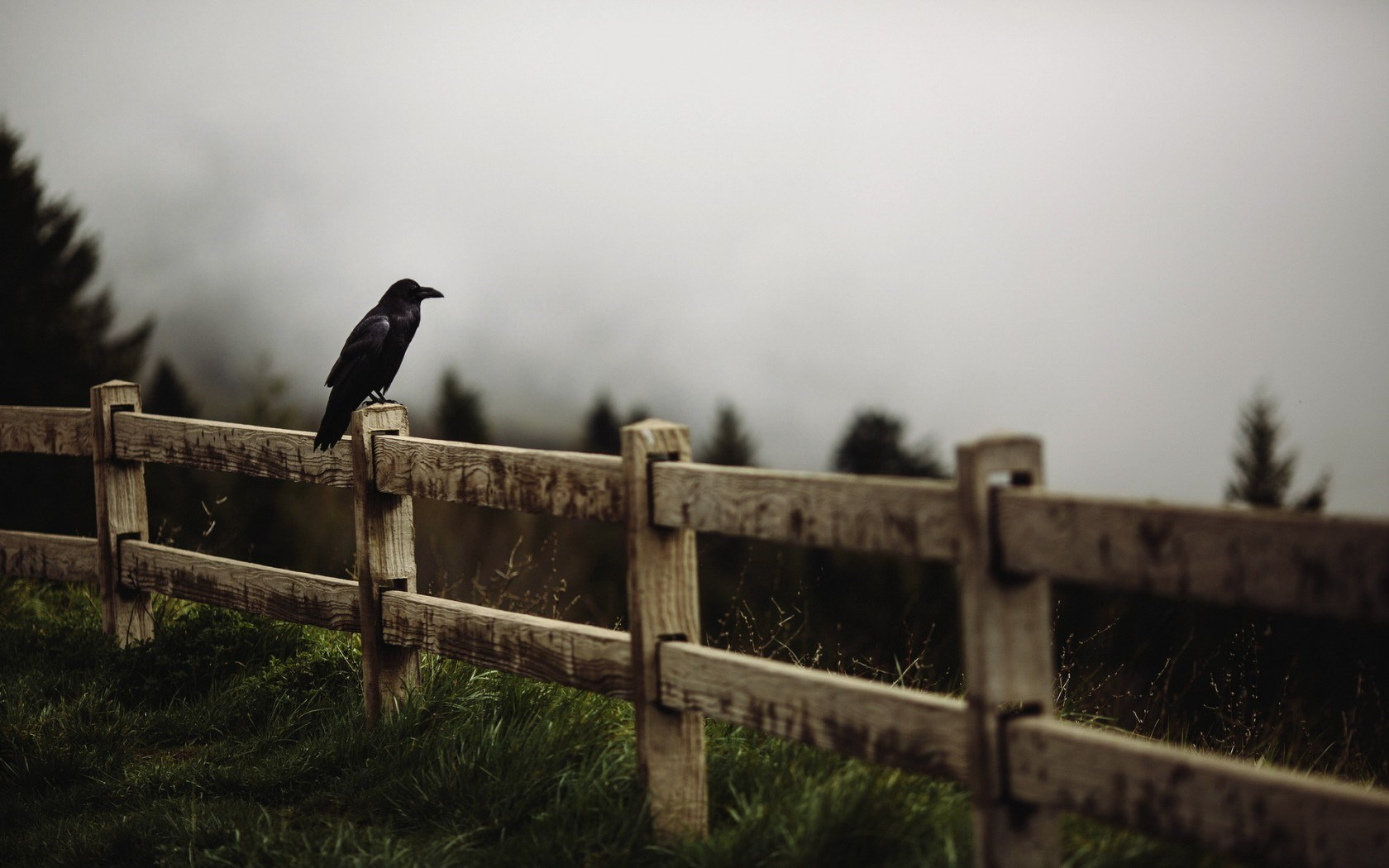 Raven Bird Wooden Fence Forest Fog HD Wallpaper