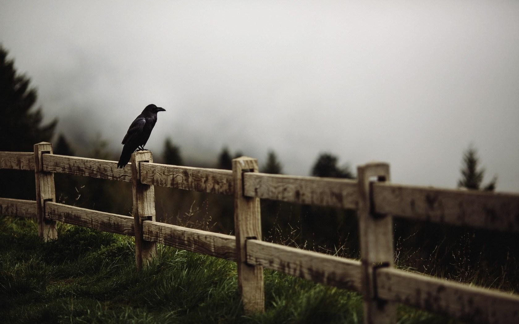 Fence Fog