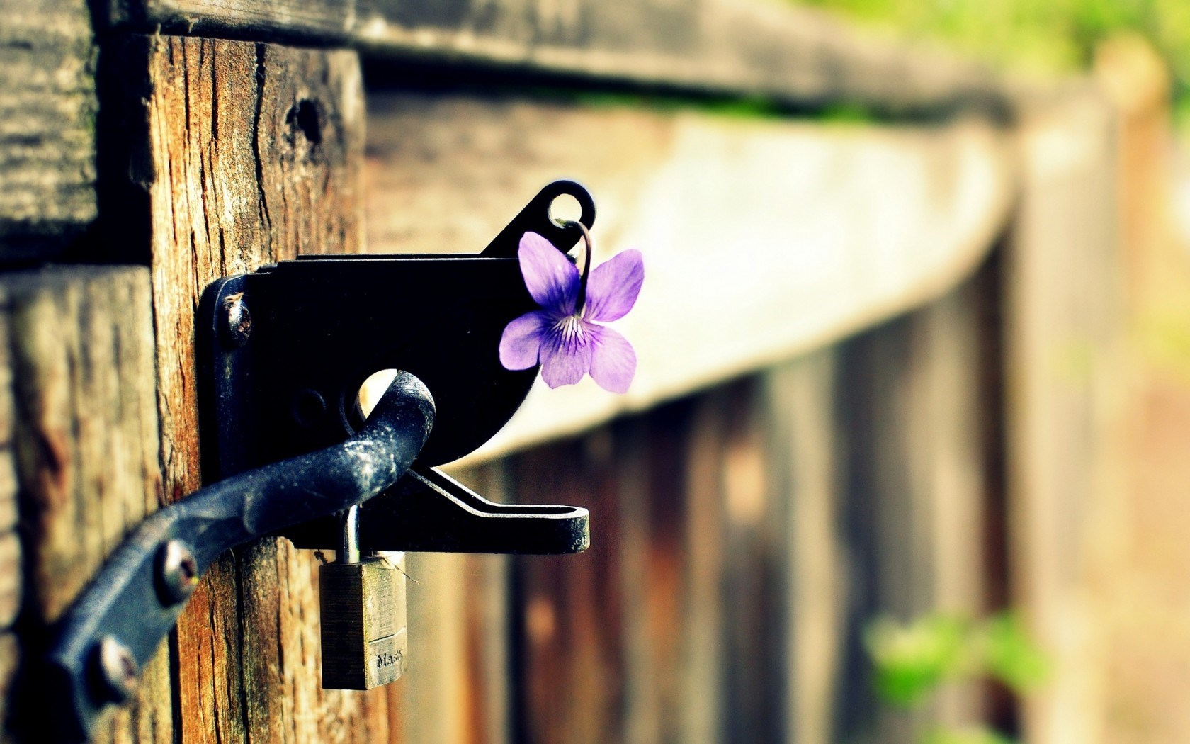 Fence Gate Lock Flower Purple