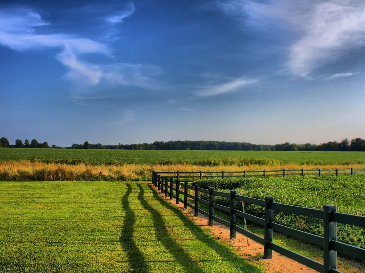 Fence Nature