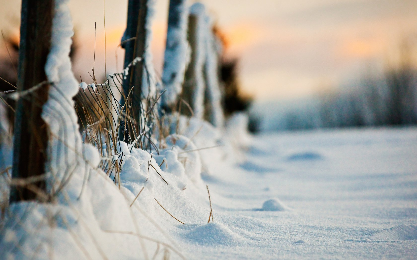 Winter Evening Snow Fence