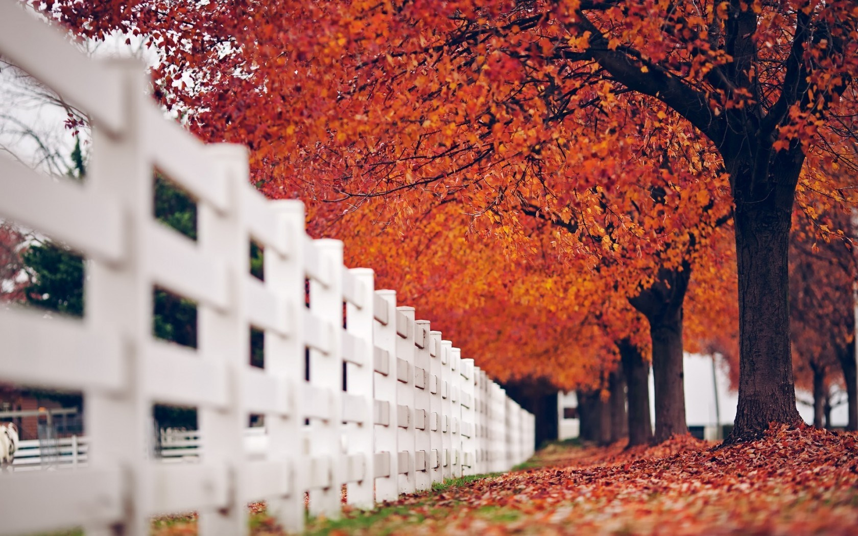 Fence White Trees Leaves Autumn Nature
