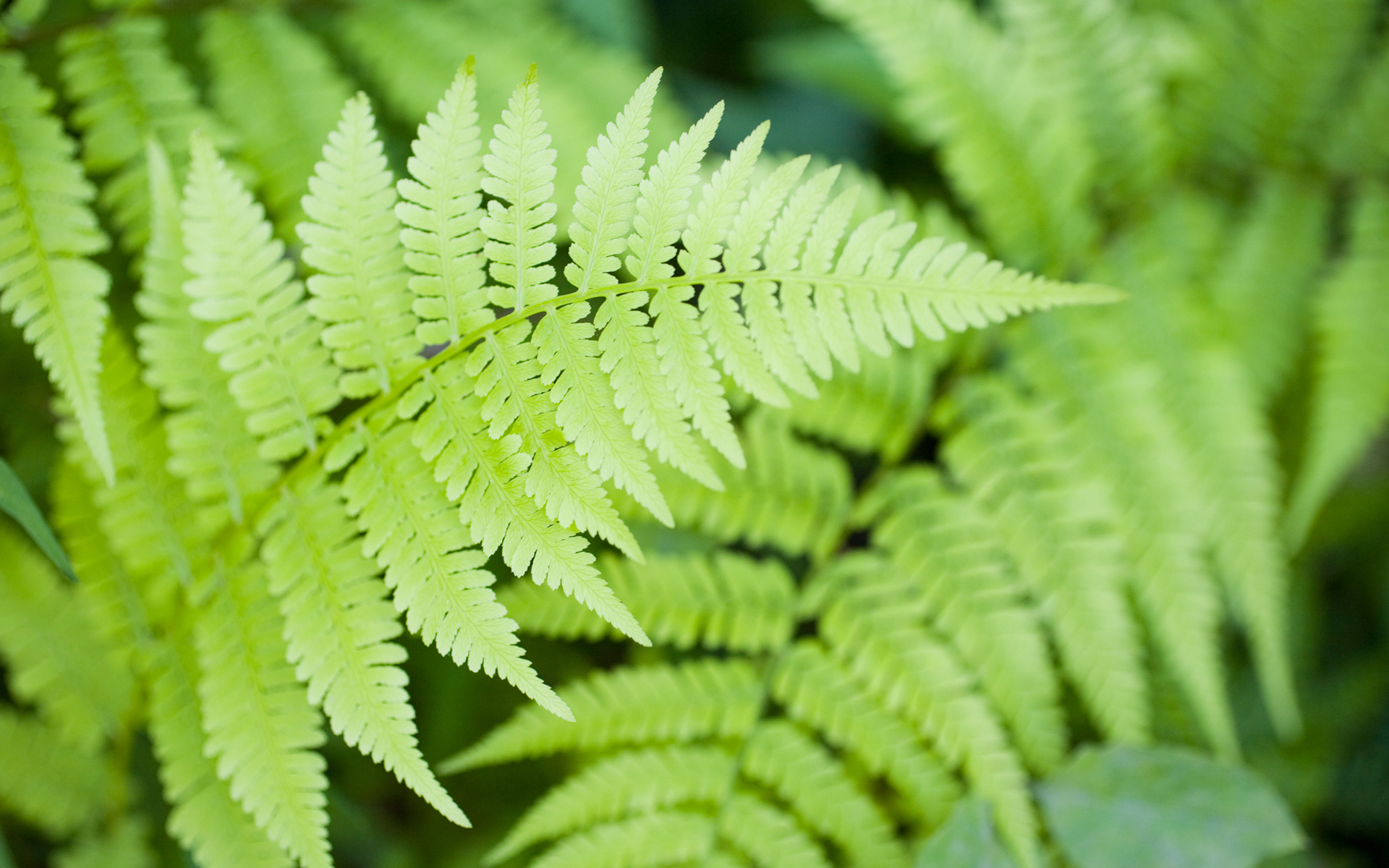 Fern Pictures