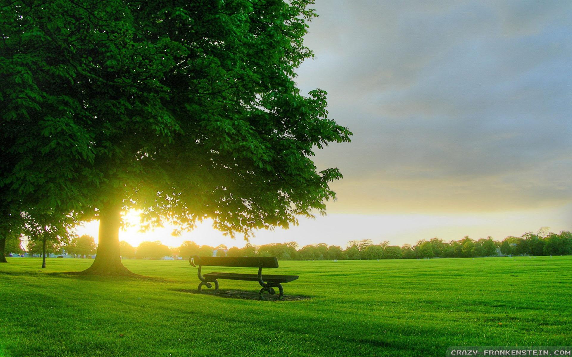 Wallpaper: Spring Field Sunrise Resolution: 1024x768 | 1280x1024 | 1600x1200. Widescreen Res: 1440x900 | 1680x1050 | 1920x1200