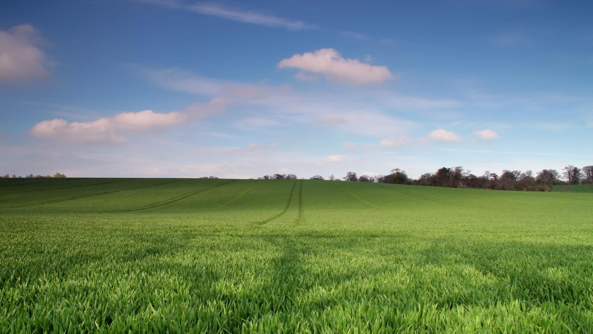 Young green wheat field free wallpaper in free desktop backgrounds category: Fields-backgrounds.