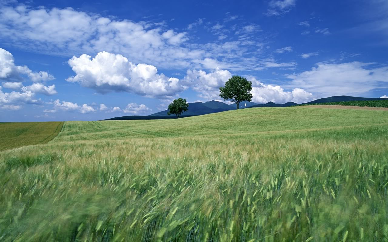 Field Background