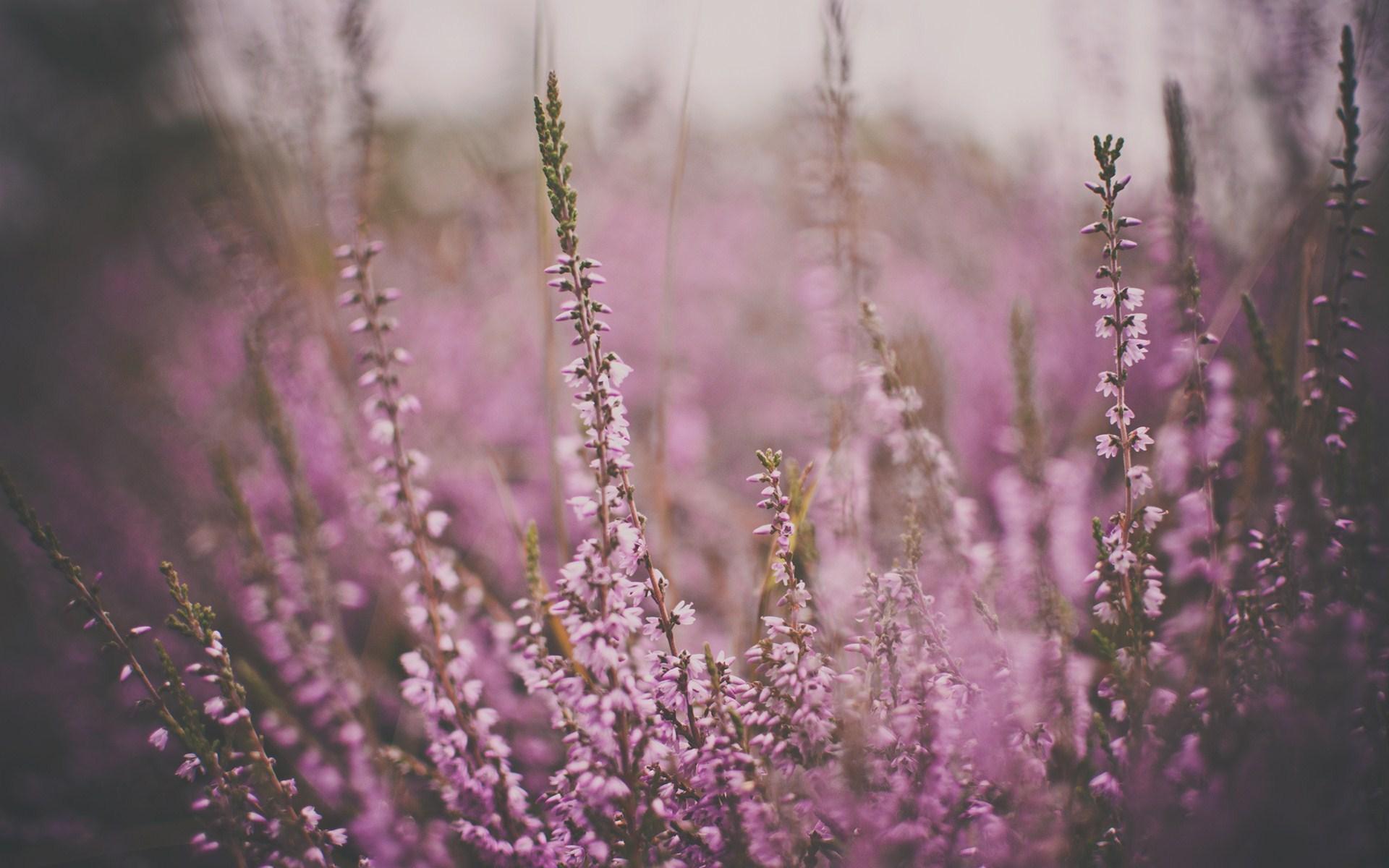 Field Flowers Macro