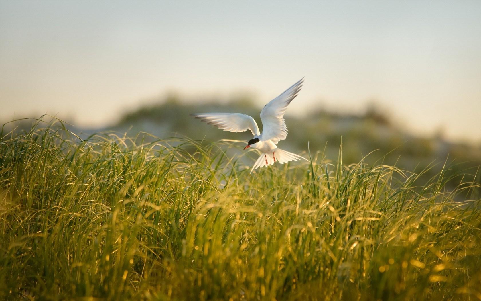 Field Grass Bird Summer
