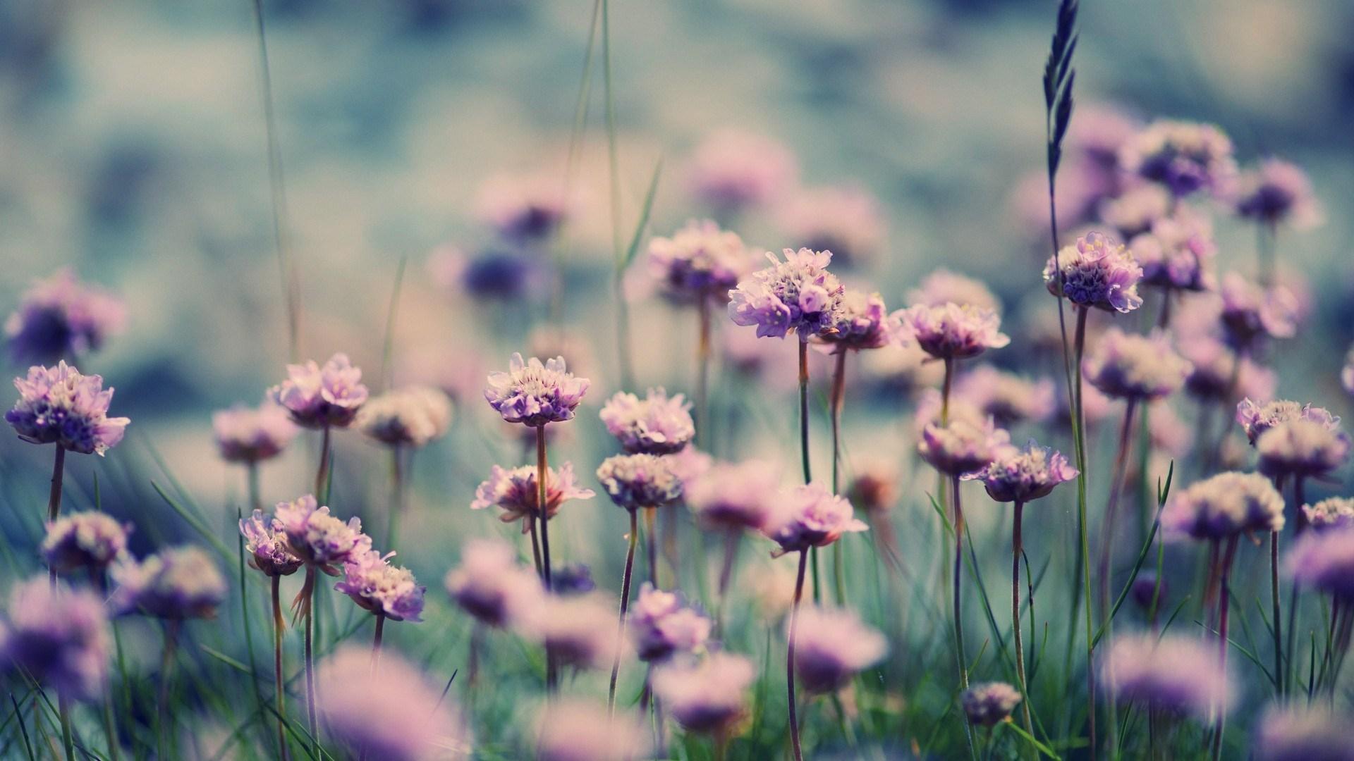 Summer Flowers Field Nature