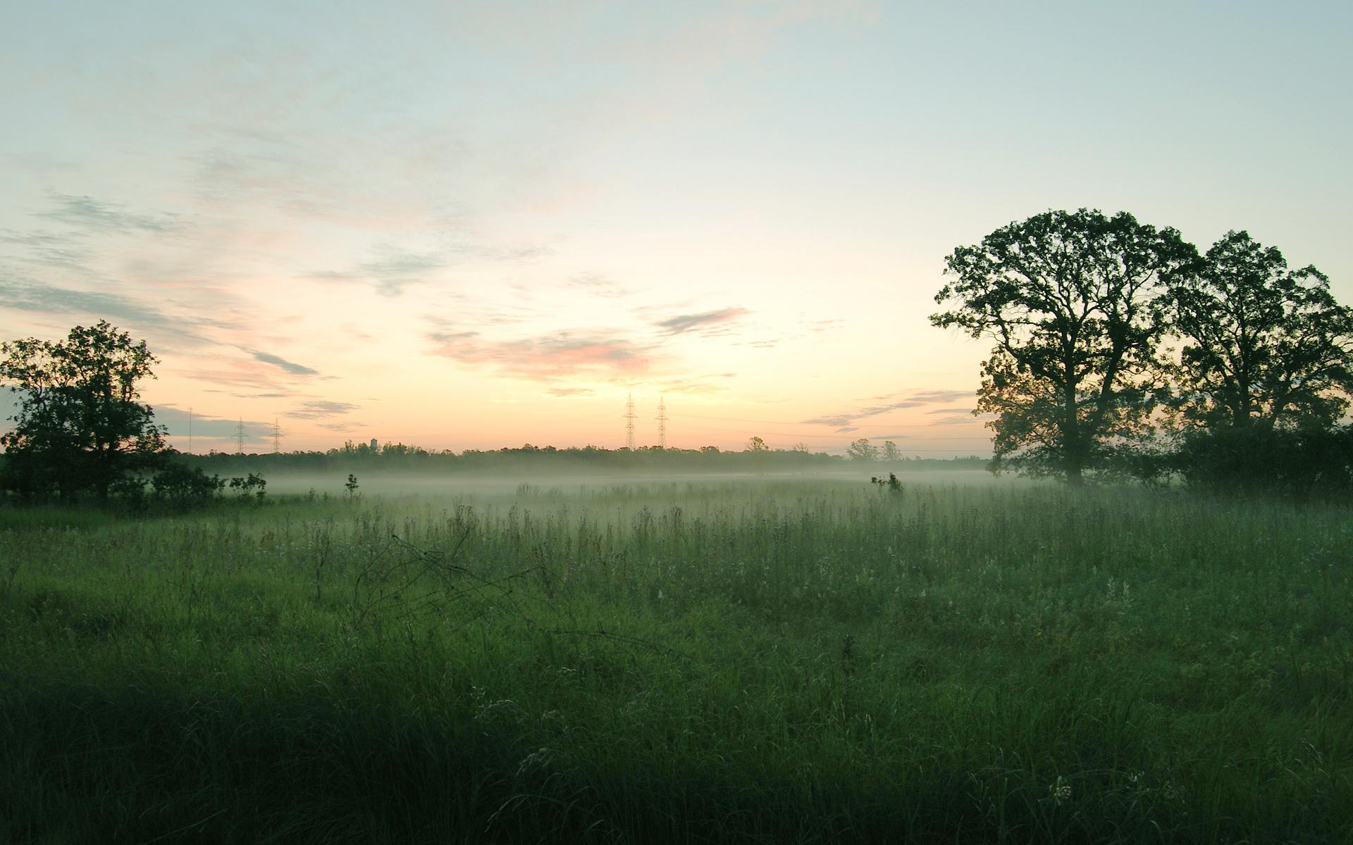 Field Mist Wallpaper