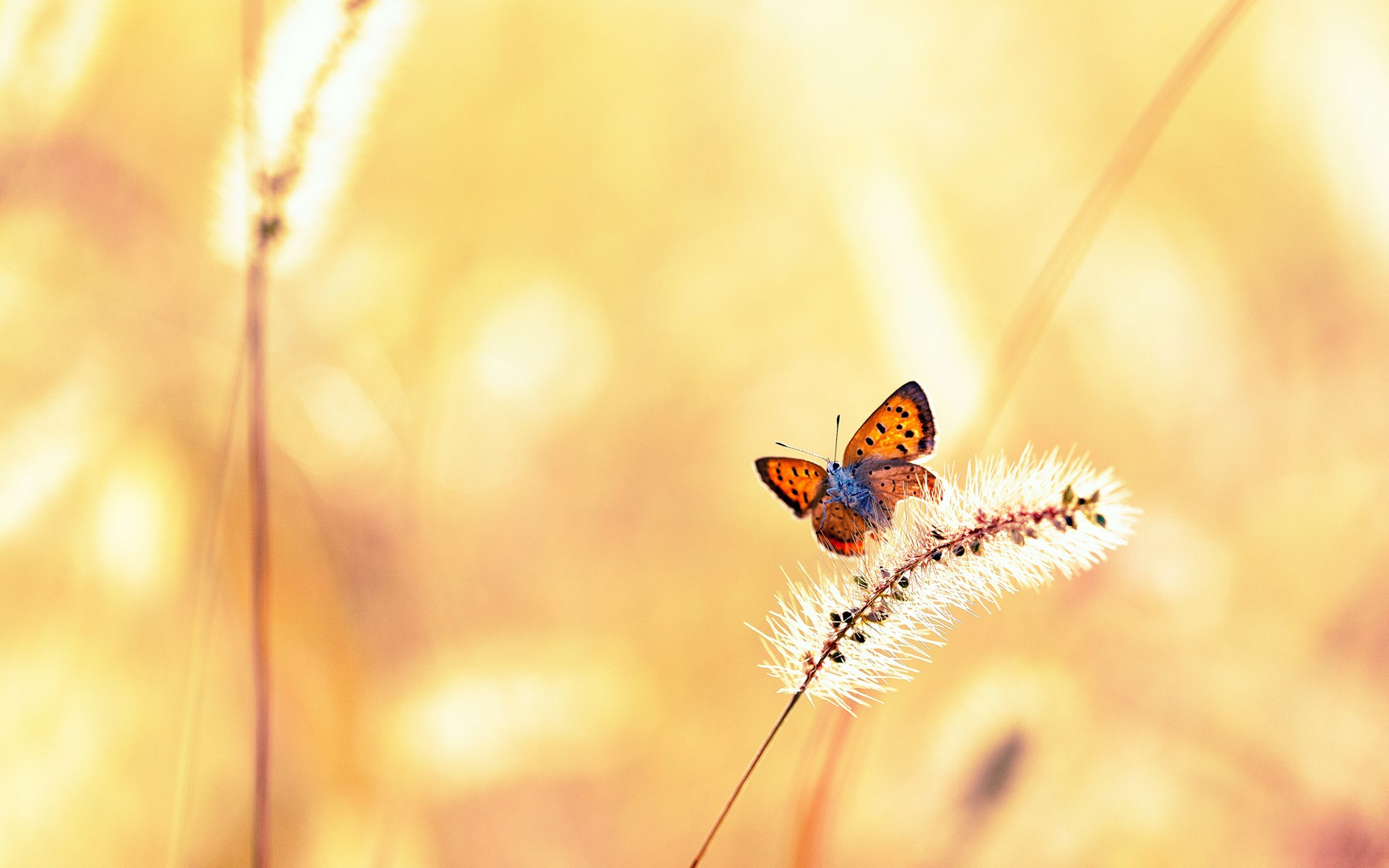 Field Nature Butterfly