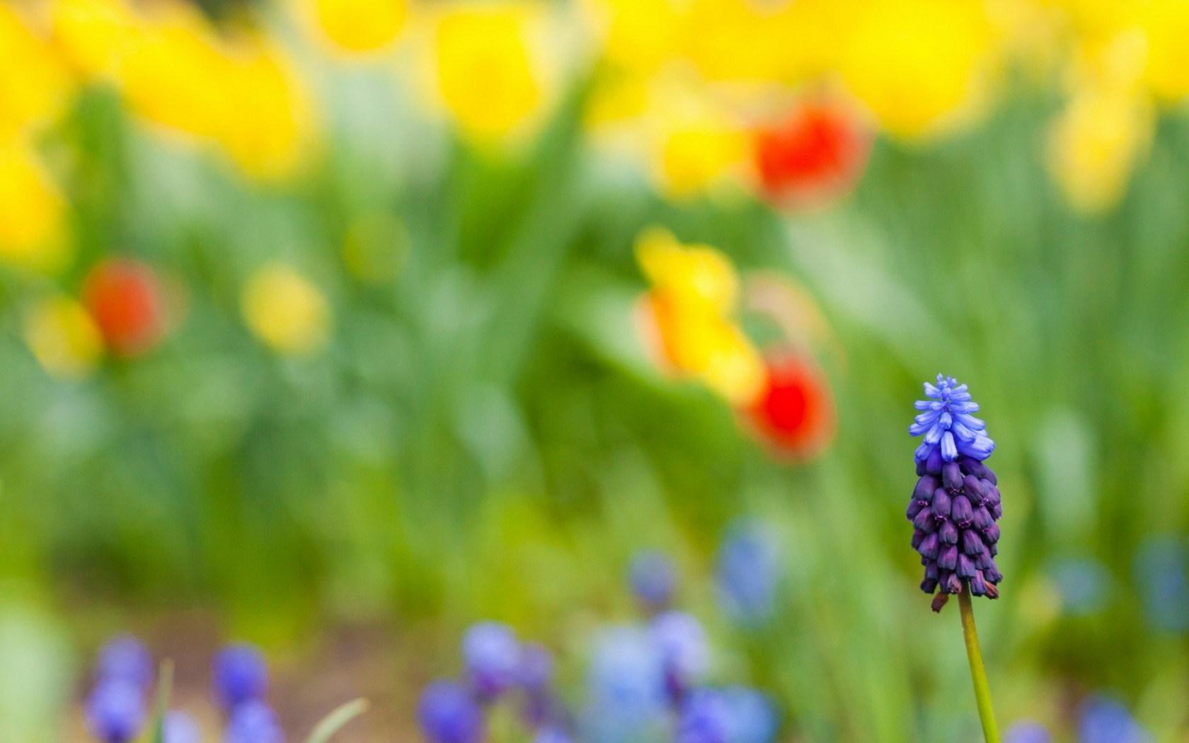 Field Summer Flower Nature