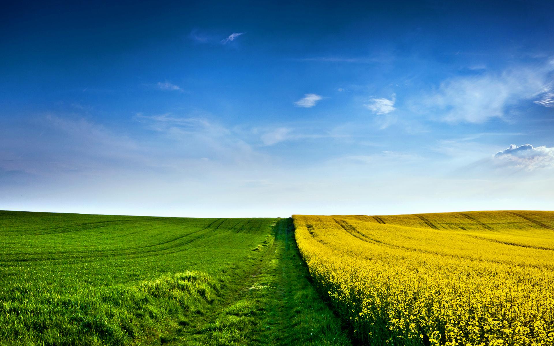 Field Wallpaper; Field Wallpaper; Field Wallpaper ...