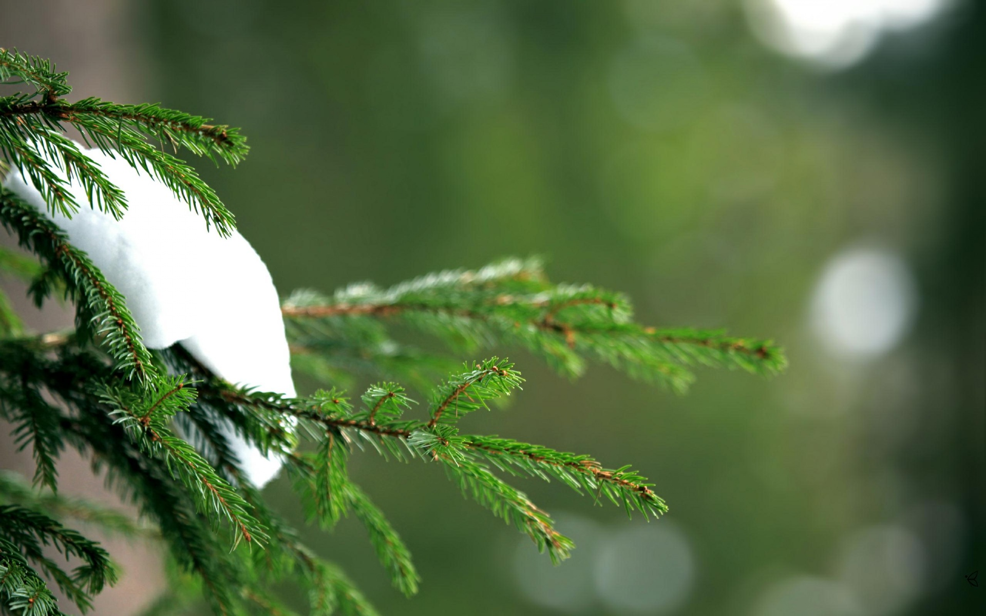 Fir Tree Wallpaper