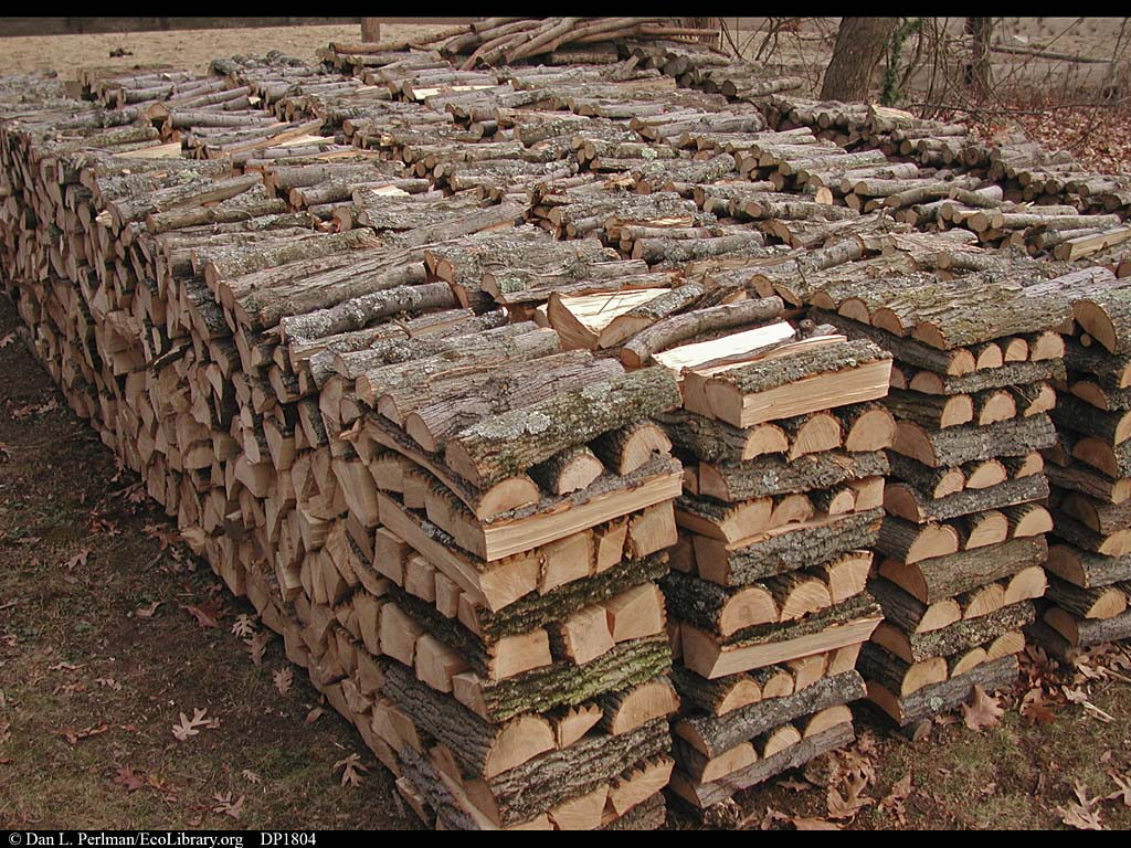 Firewood pile, Massachusetts, USA