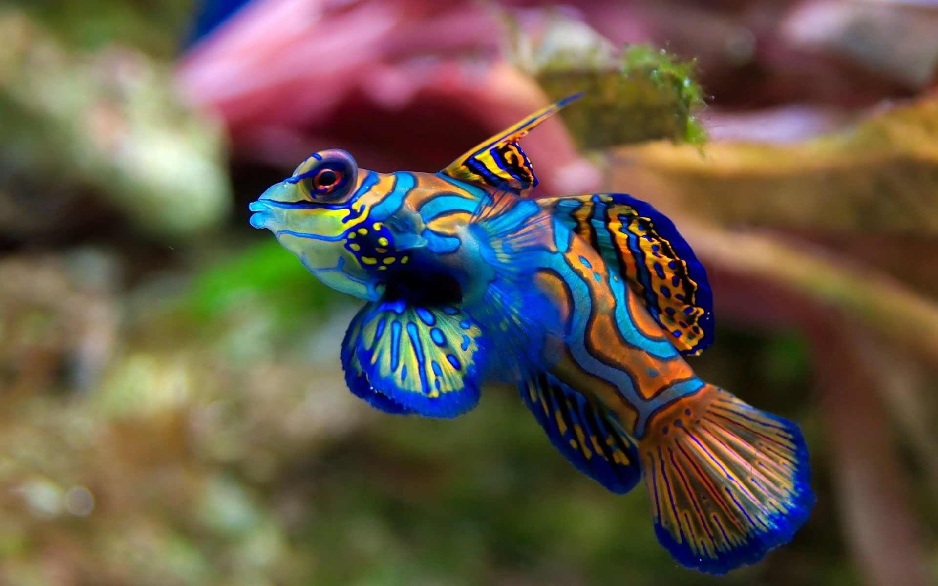 Brown's review focused especially on bony fish. The level of mental complexity they displayed he found to be on a par with most other vertebrates, ...