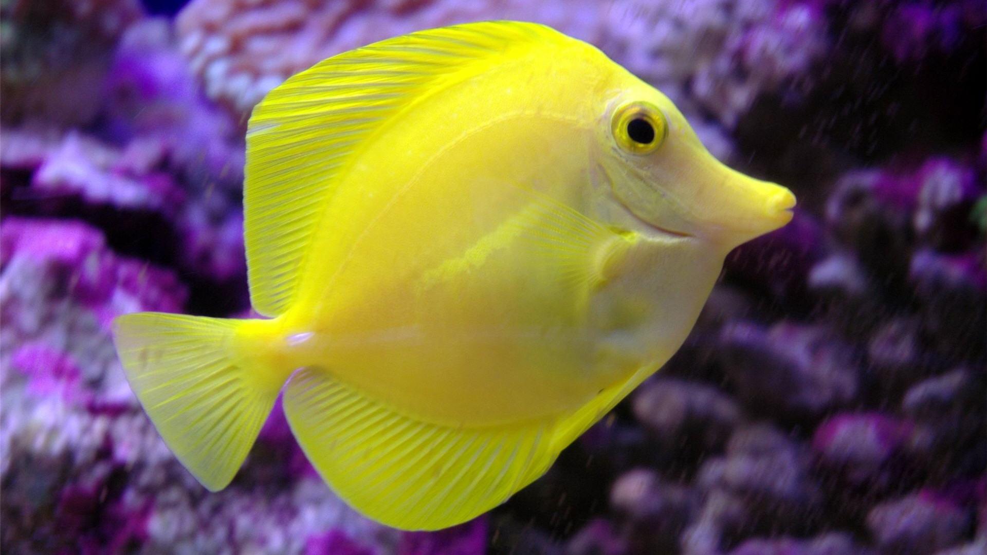 Download Free Fish In The Ocean Download Wallpaper