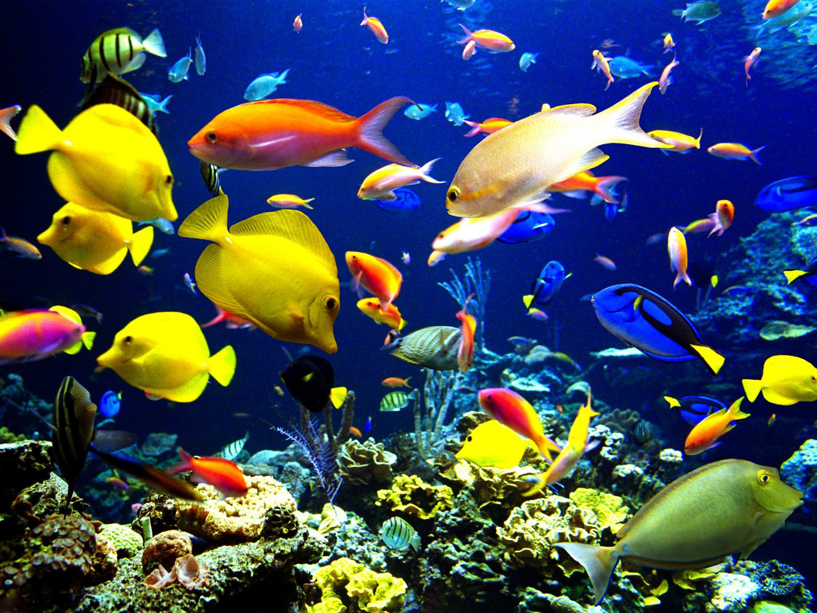 Original Size: Click Here. Underwater Fish Background Description : Download Underwater ...