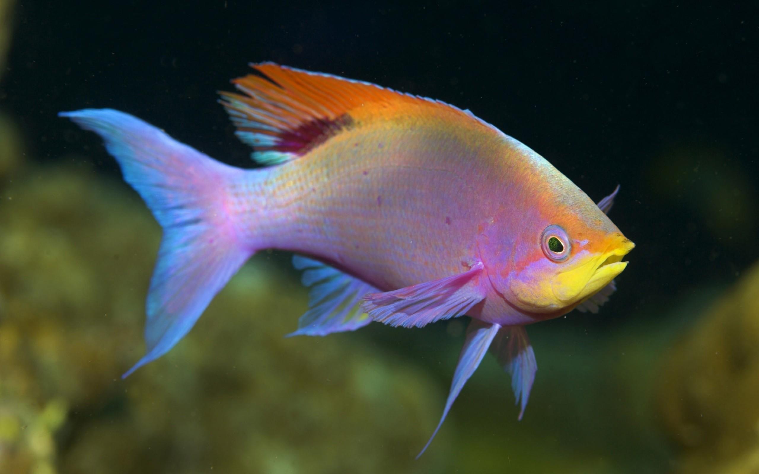 ... Fish #05 Image ...