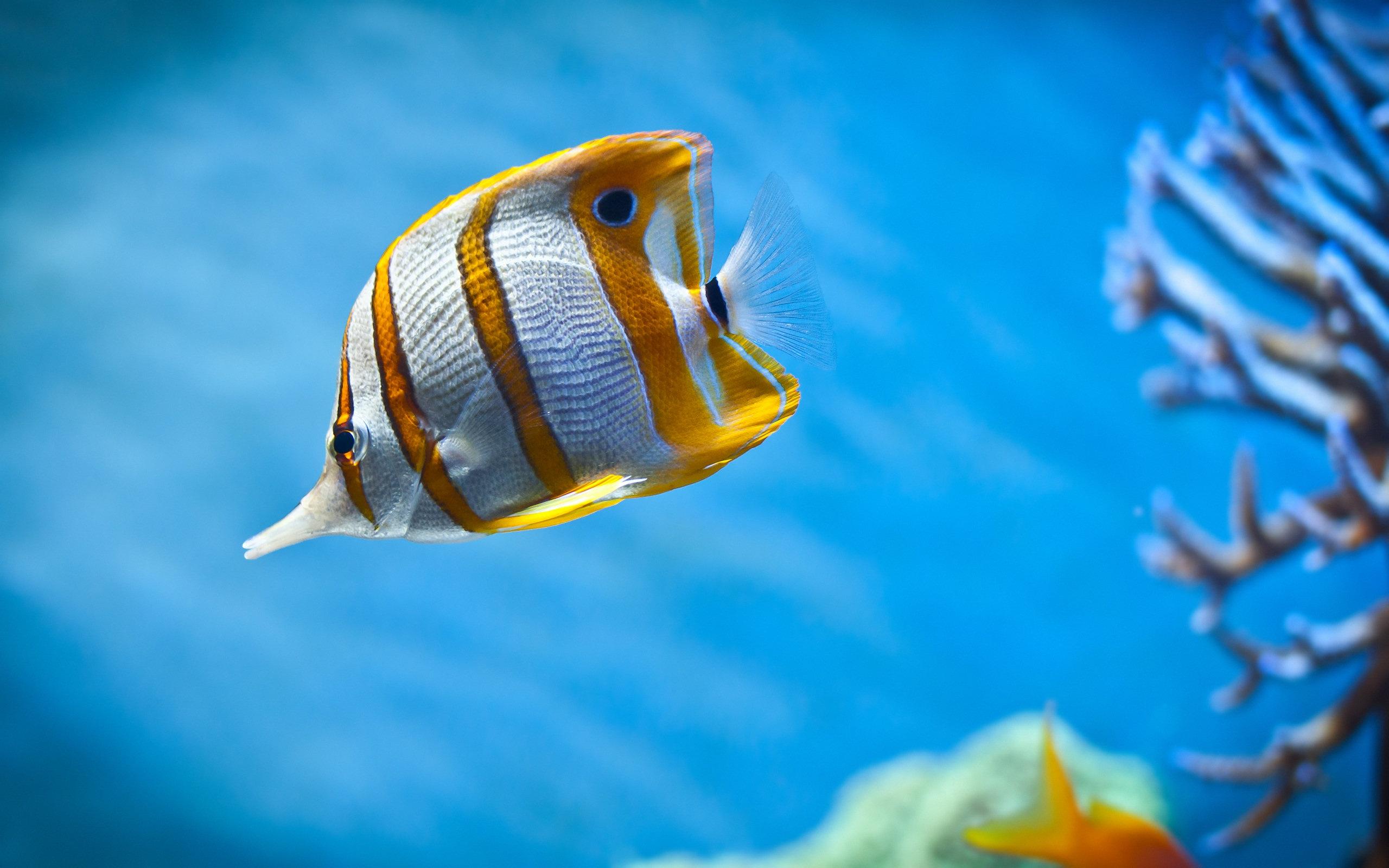 Fish Wallpaper · Fish Wallpaper ...