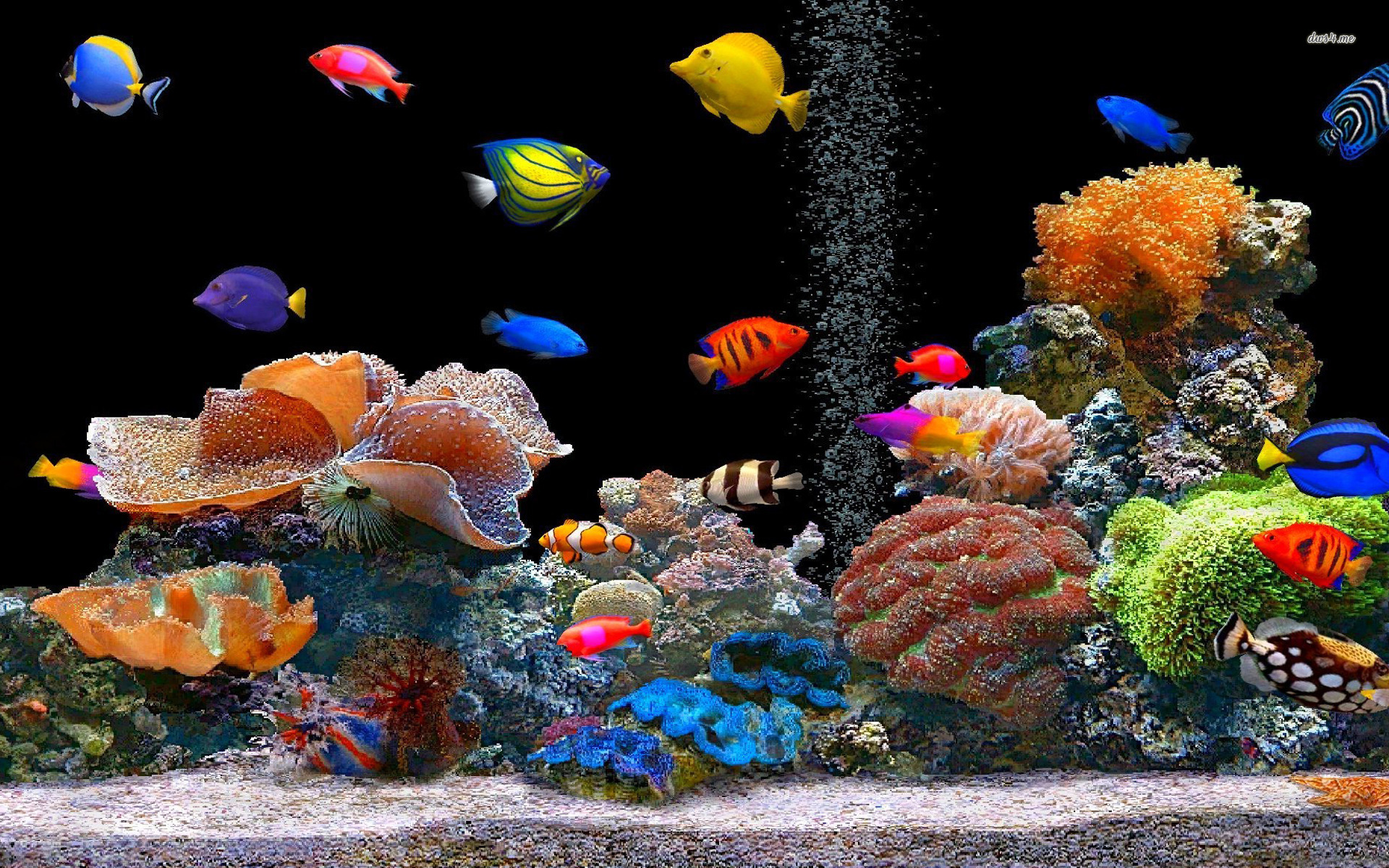 Tropical fishes wallpapers hd