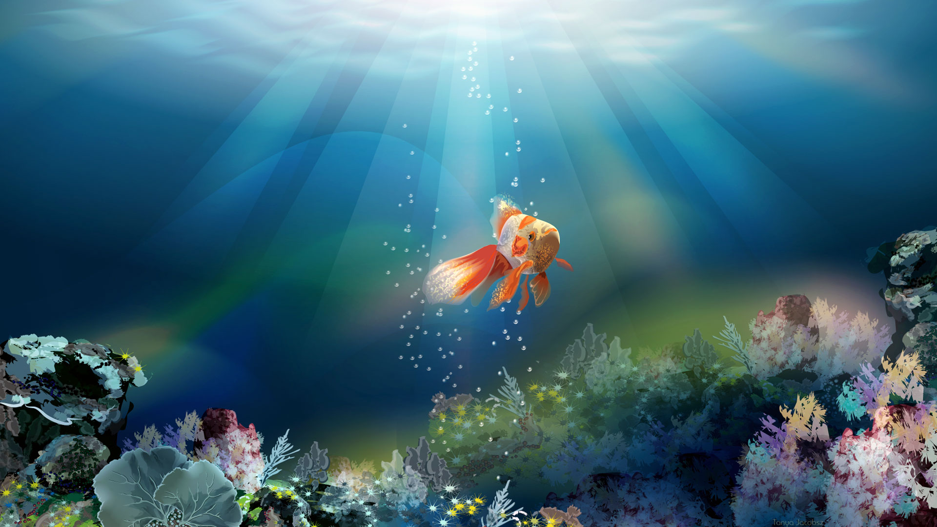 Fish Wallpaper HD Free Download