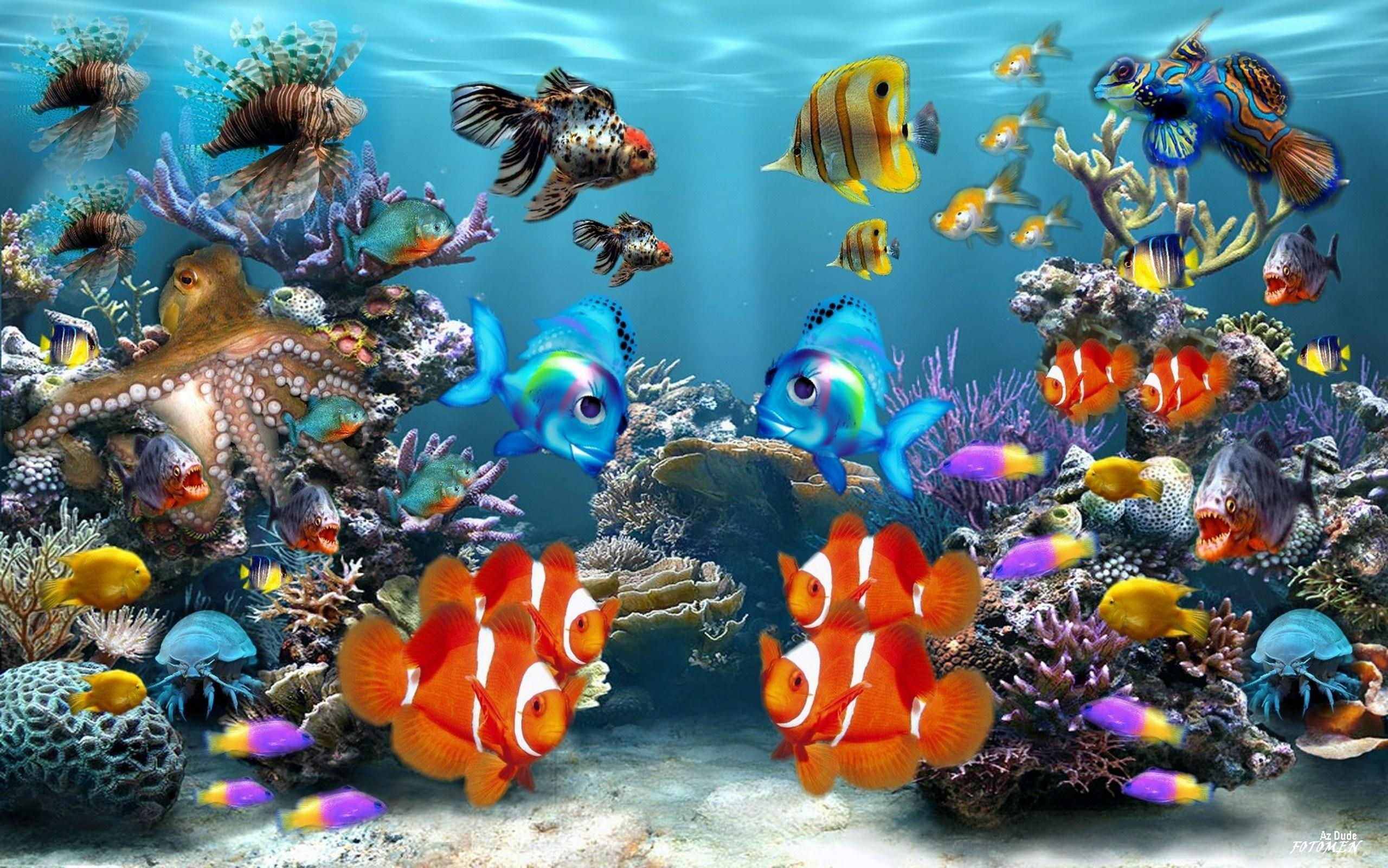 Fish Wallpaper · Fish Wallpaper · Fish Wallpaper ...