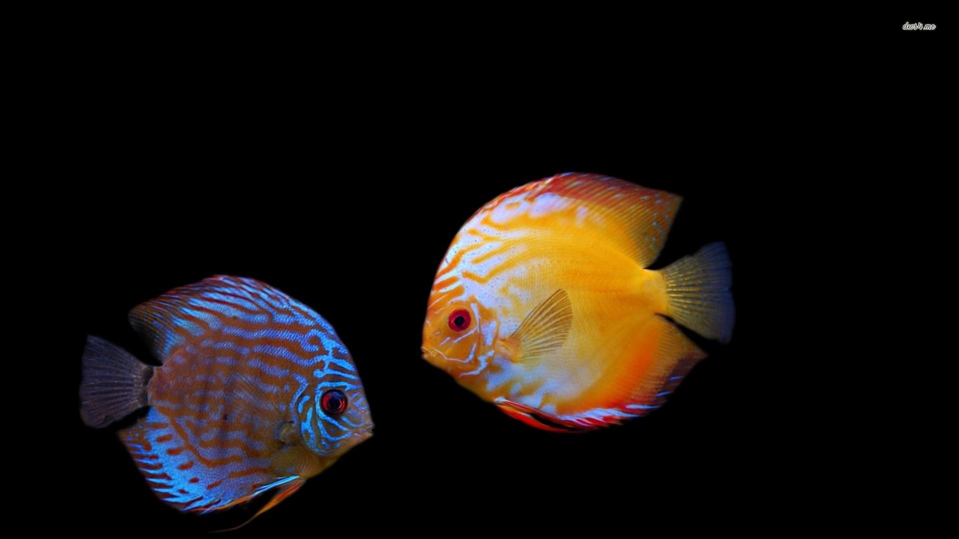 Fish Wallpaper 803 HD Cool