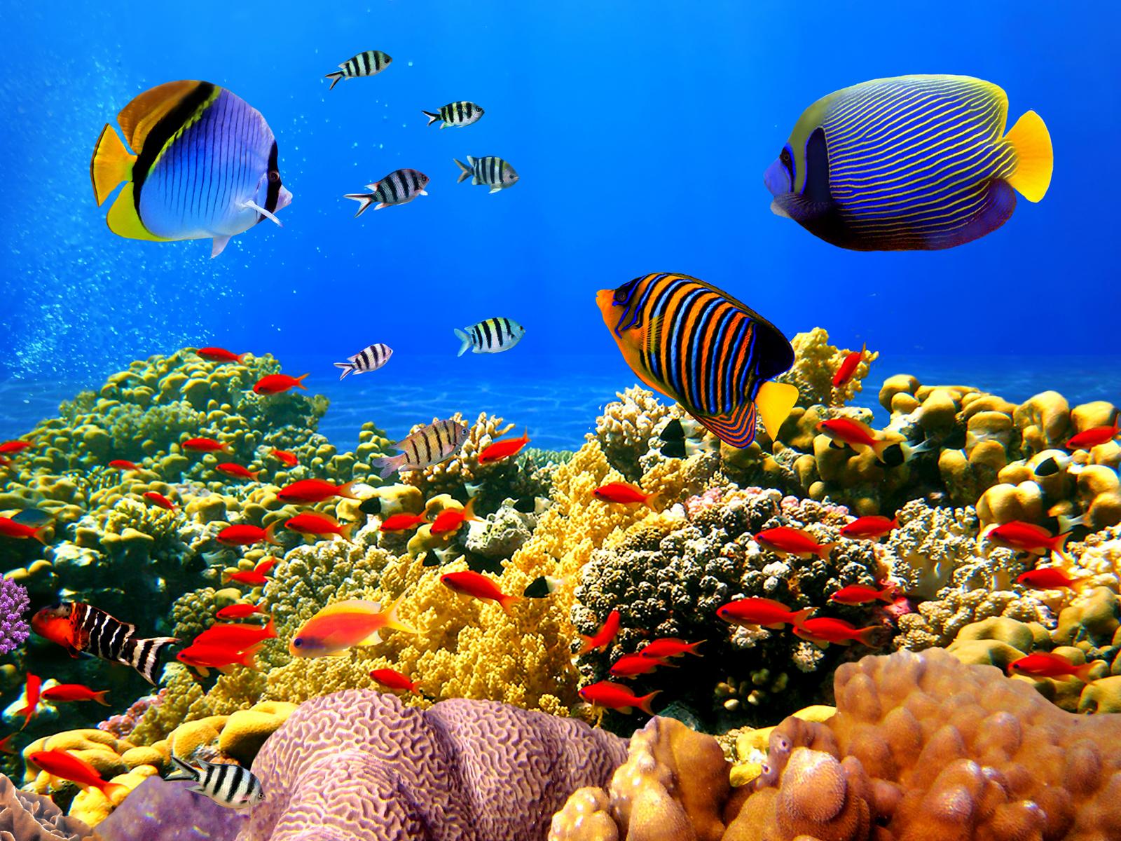 3D Sea Fish Wallpaper