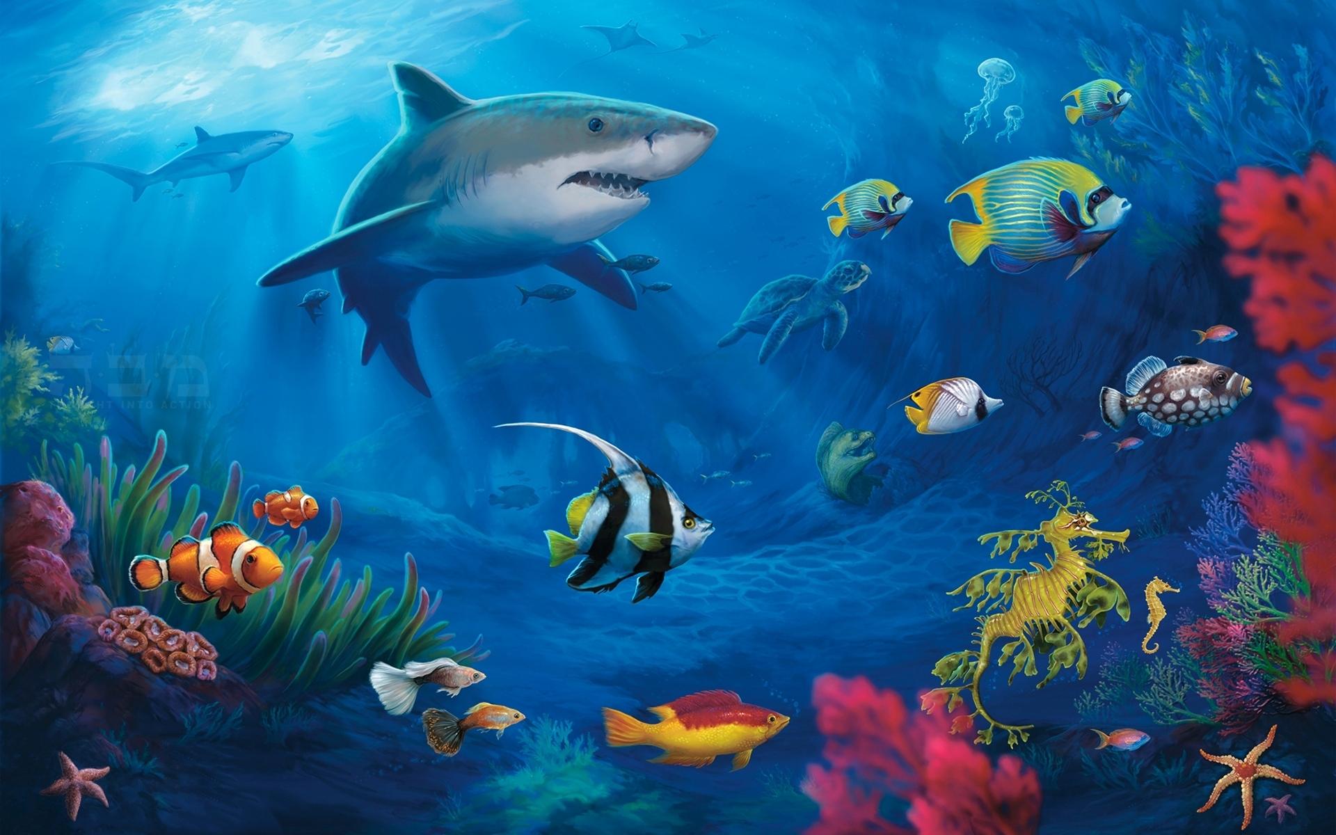 1920 x 1200 - 1175k - jpg 5982 Underwater World ...