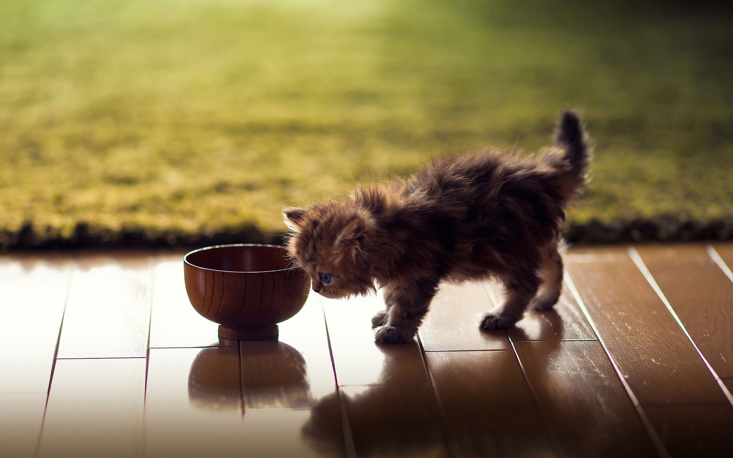 Wooden Floor Kitten Bowl Rug HD Wallpaper
