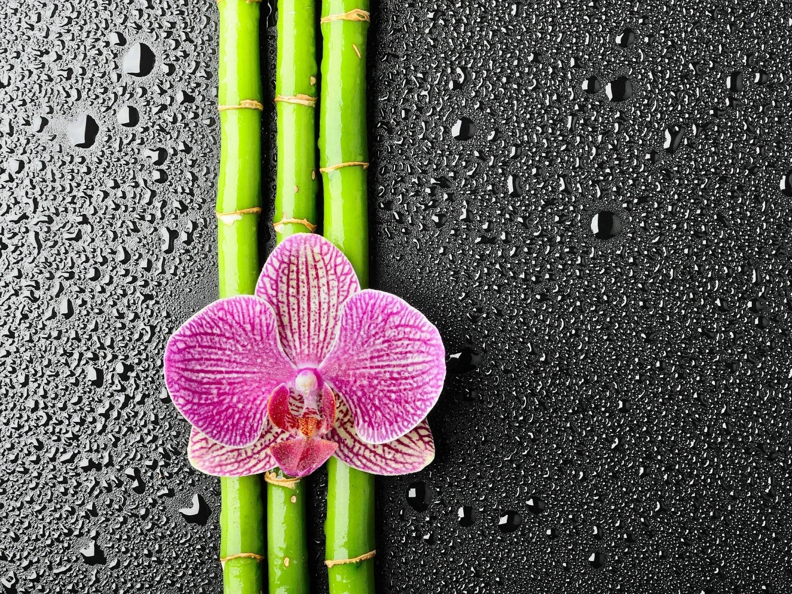 Description: The Wallpaper above is Flower Bamboo Wallpaper in Resolution 1600x1200. Choose your Resolution and Download Flower Bamboo Wallpaper