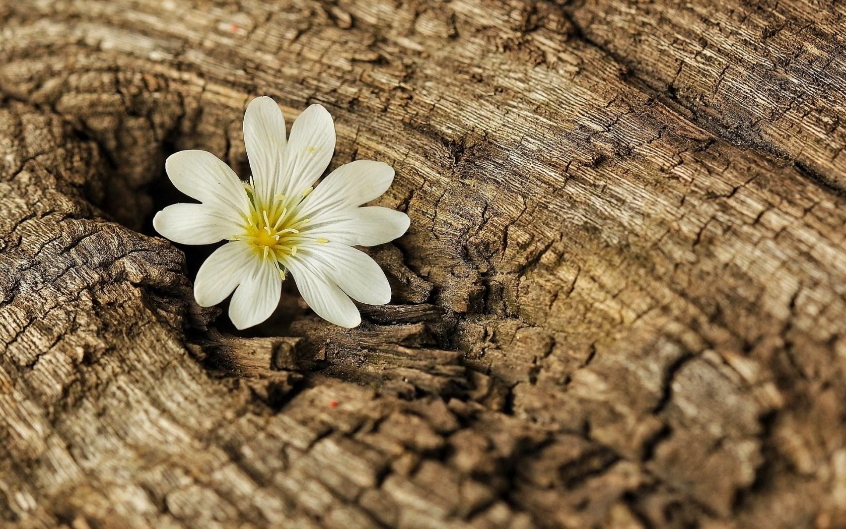 Flower Bark Wood Tree