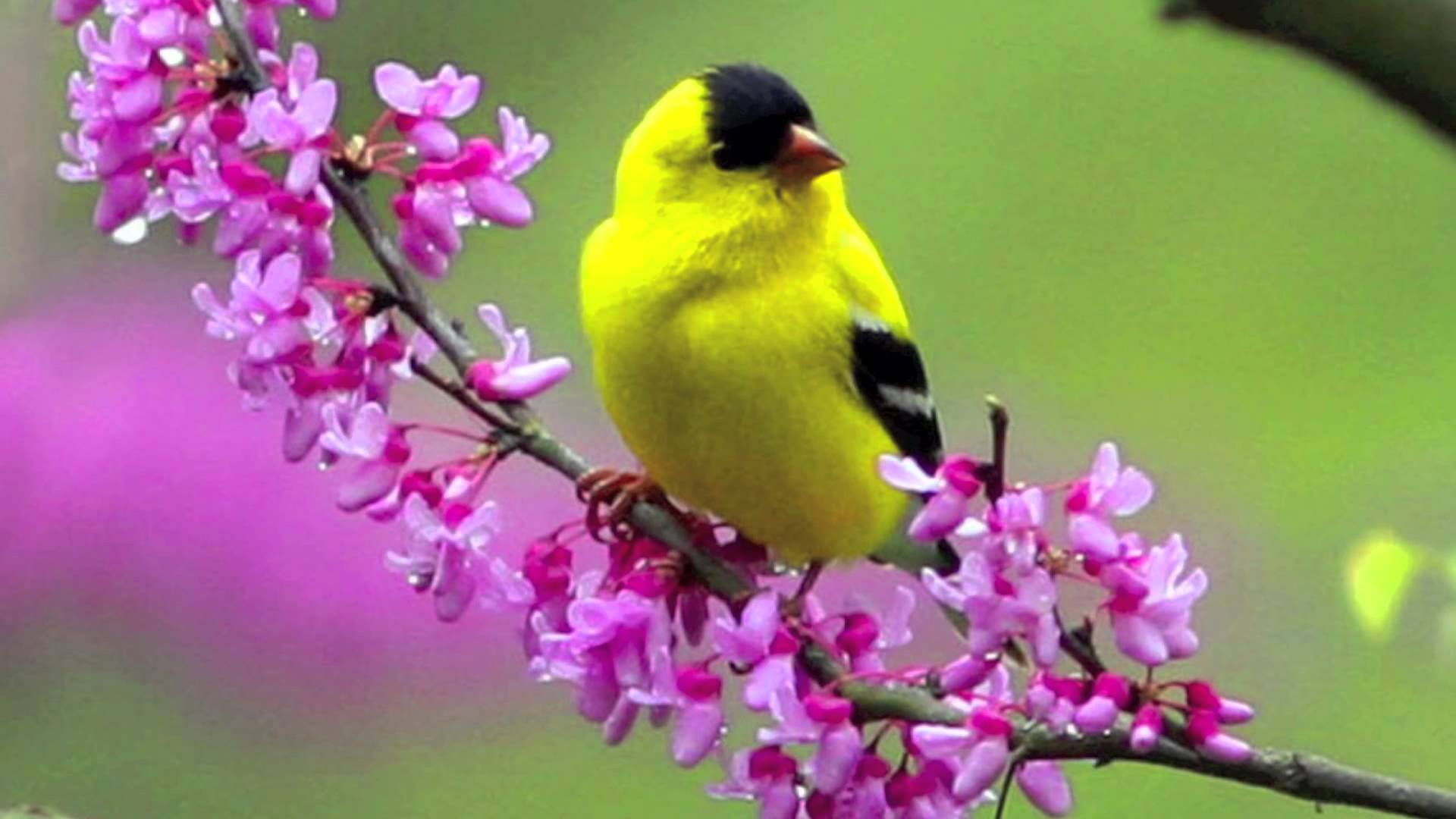Flowers with yellow. Flowers with yellow bird