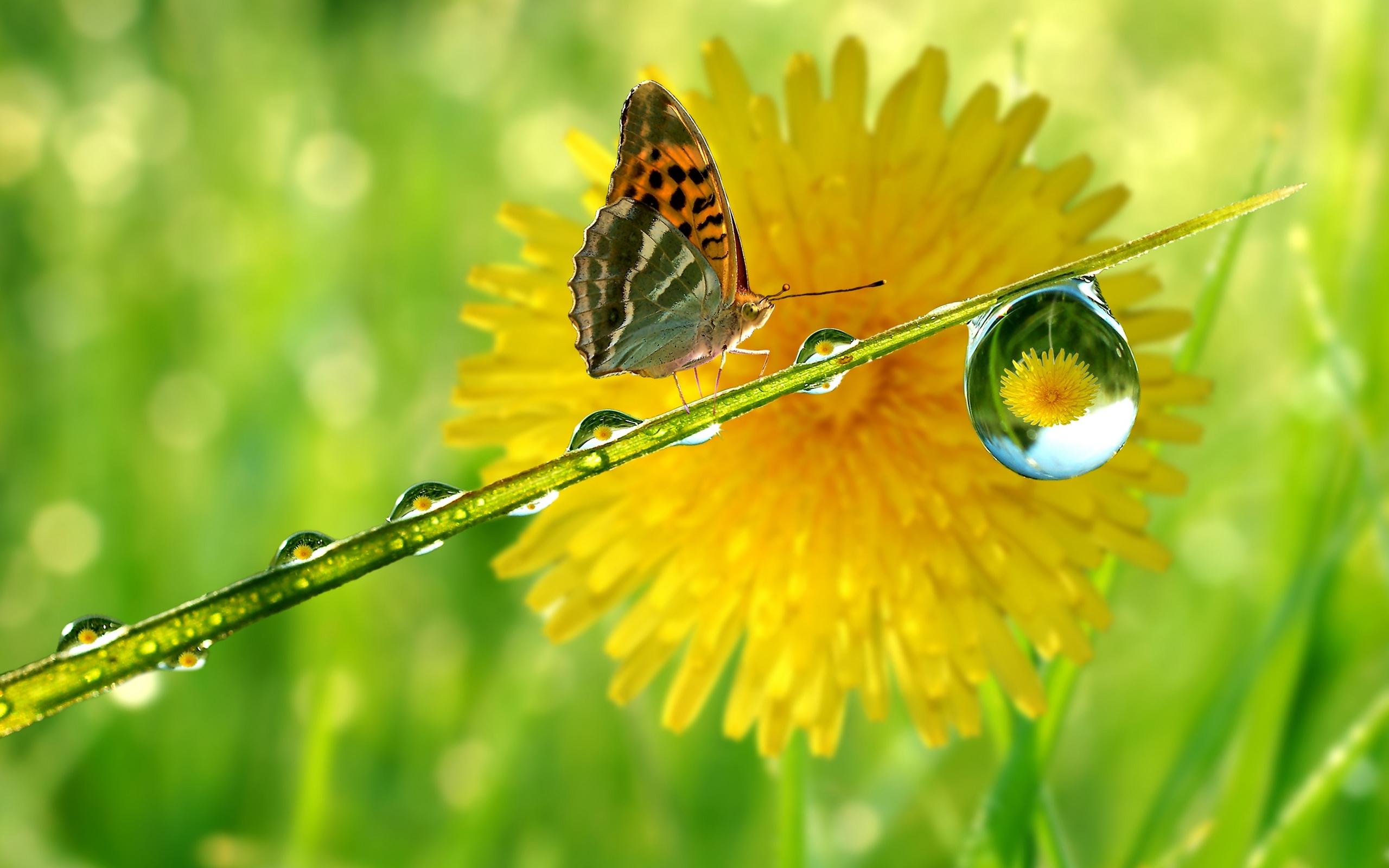 Butterfly in front of flower