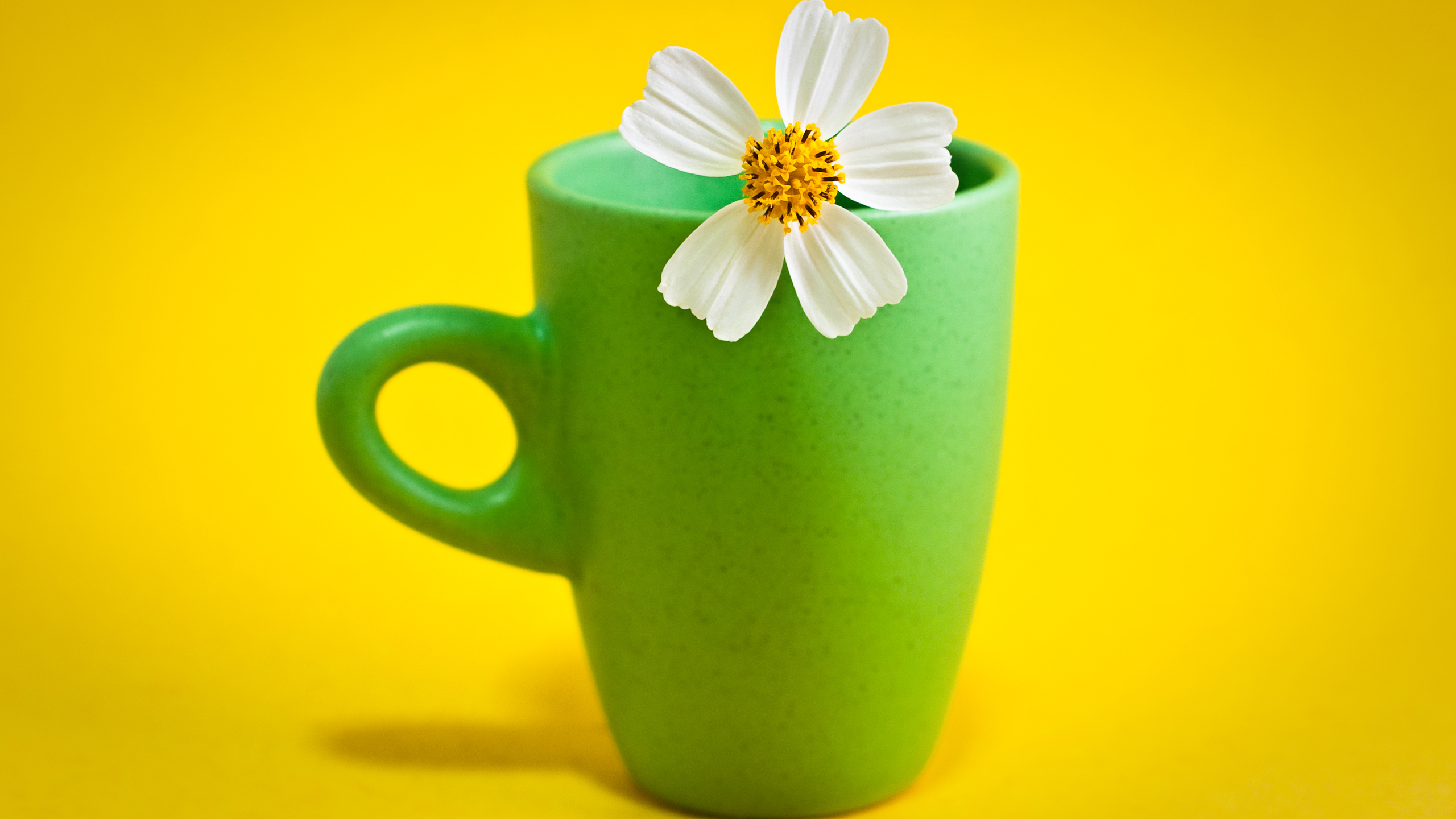 Flower Cup Wallpaper